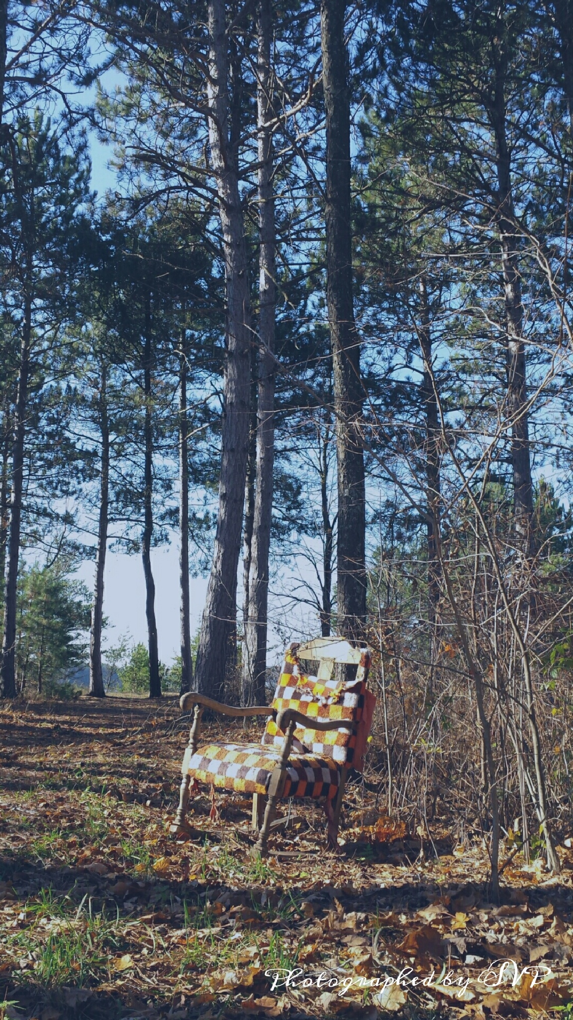 Chair out in the woods by Myartsnphotos