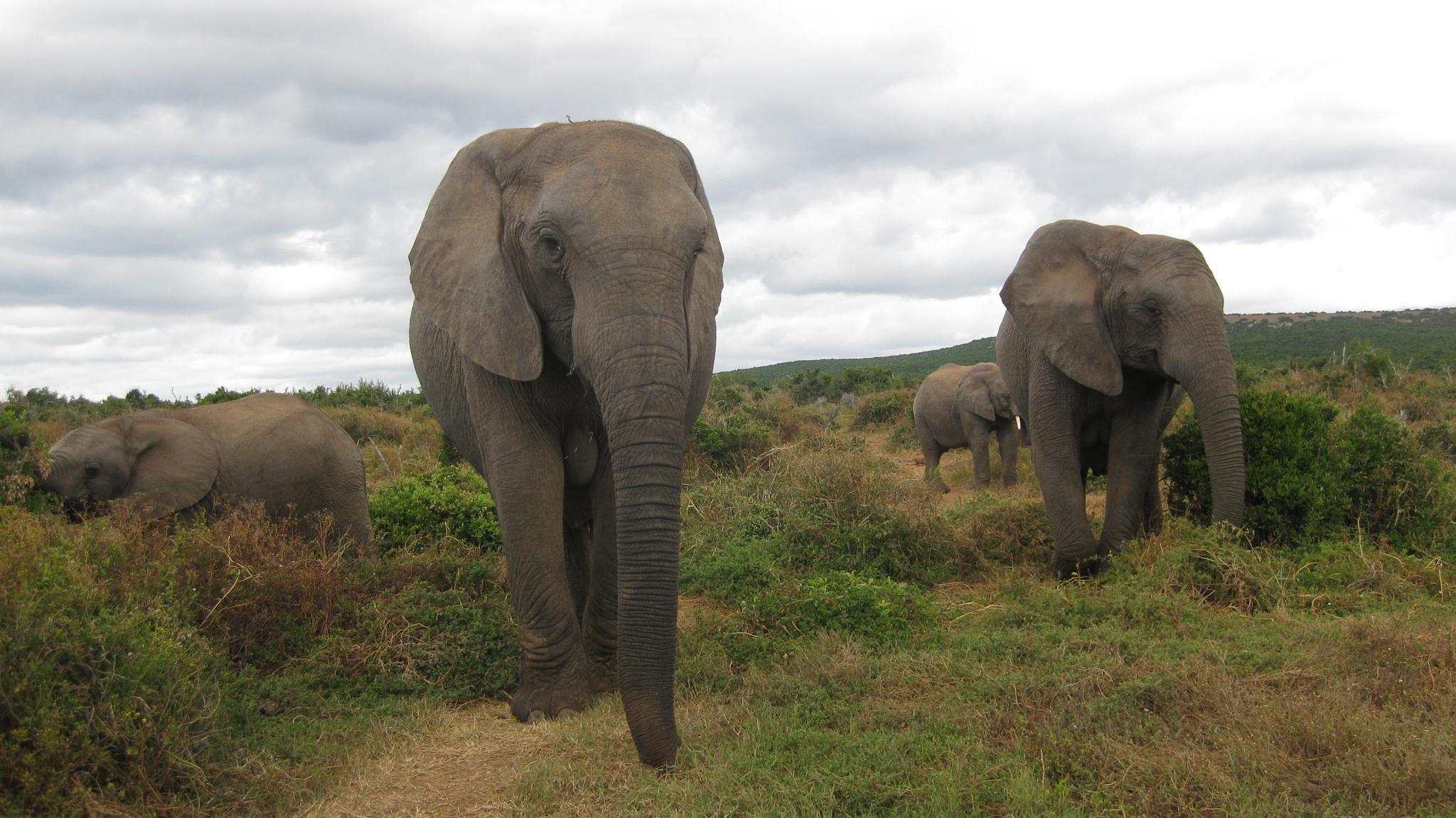 Photo in Animal #animals #elephants