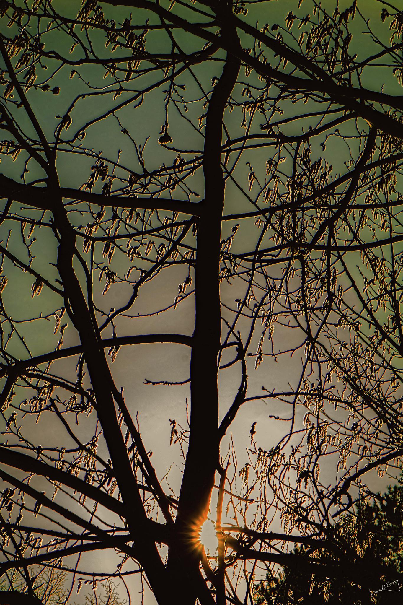 Sallow-tree I by lennart.ekberg.90