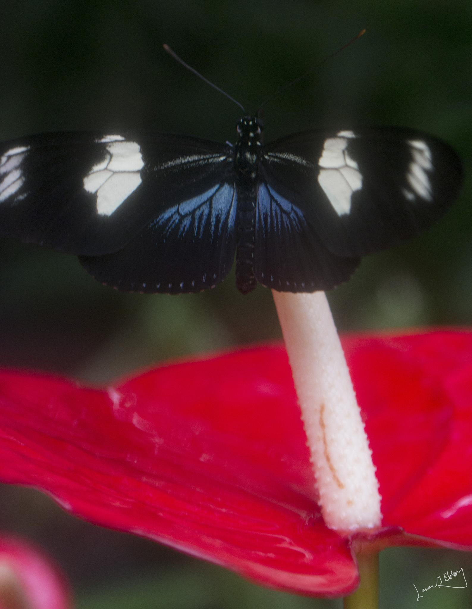 Lovely butterfly I by lennart.ekberg.90
