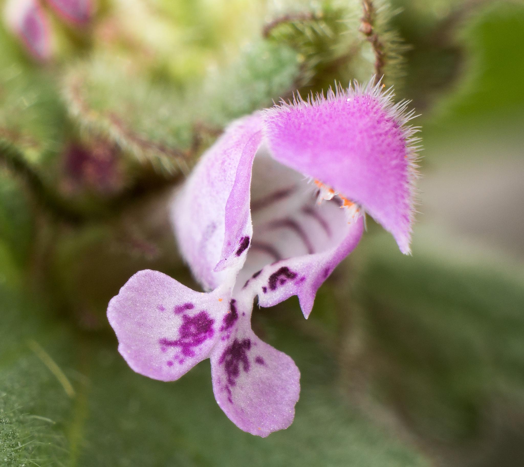 Tiny orchid. by NatureGirl