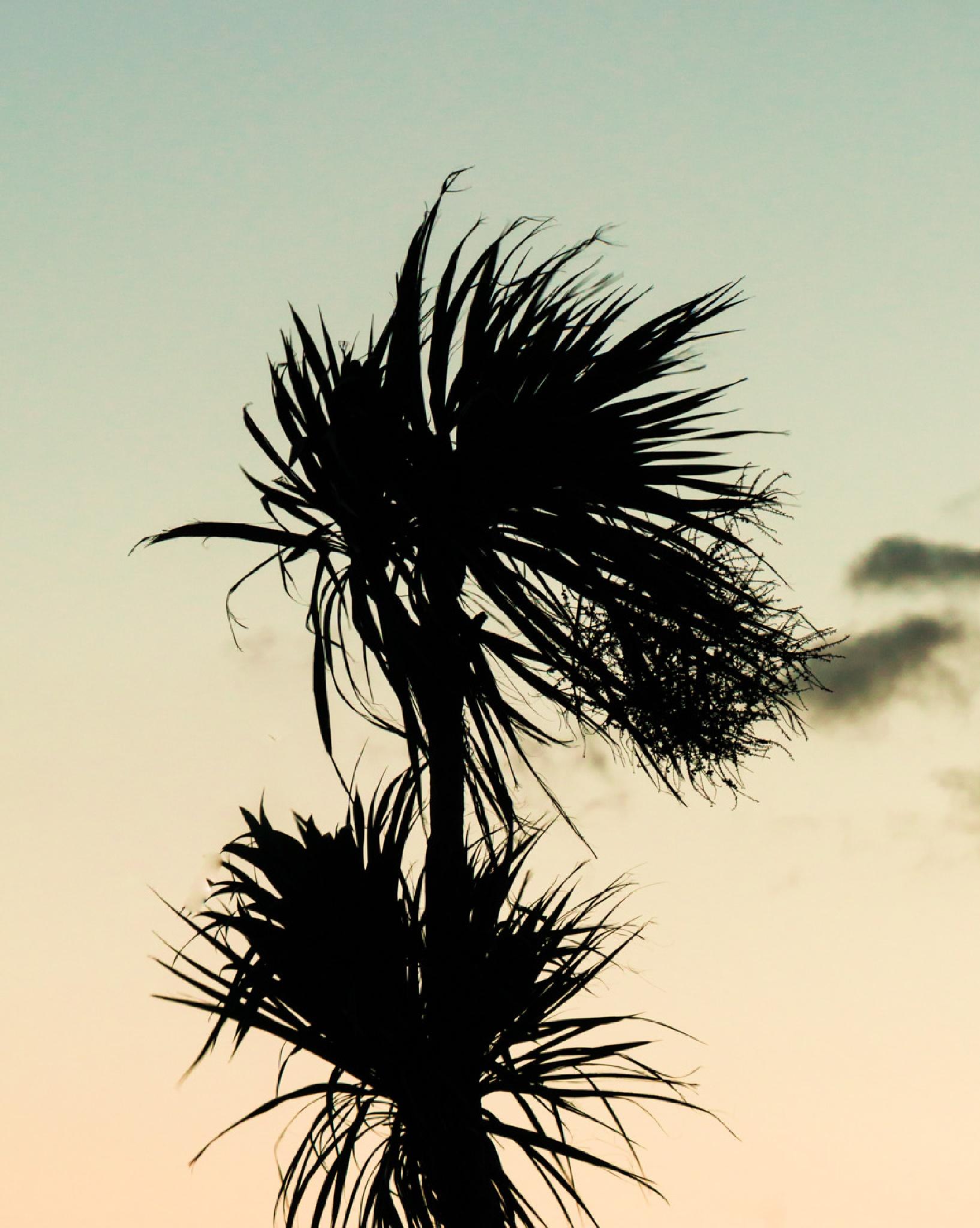 """Palm tree"". by NatureGirl"