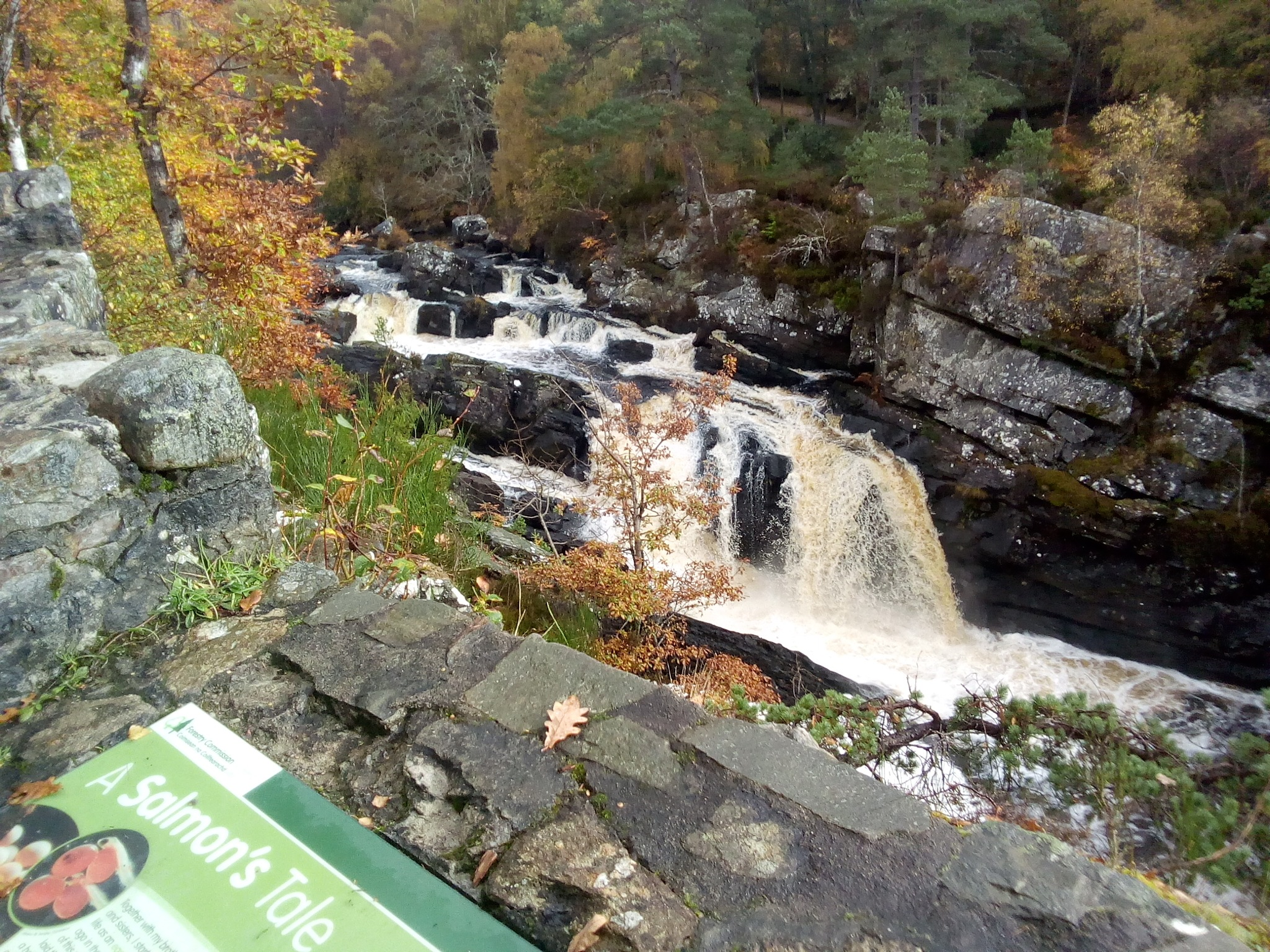 rogie falls by kenneth campbell
