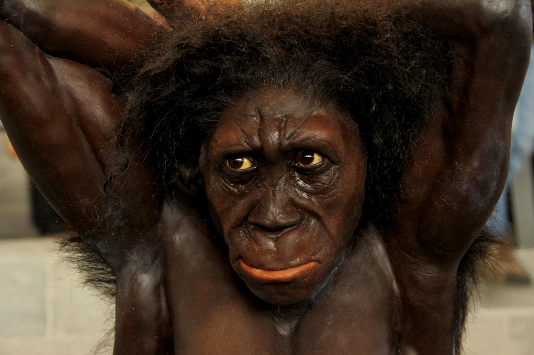 Australopithecus sediba by lauttawar
