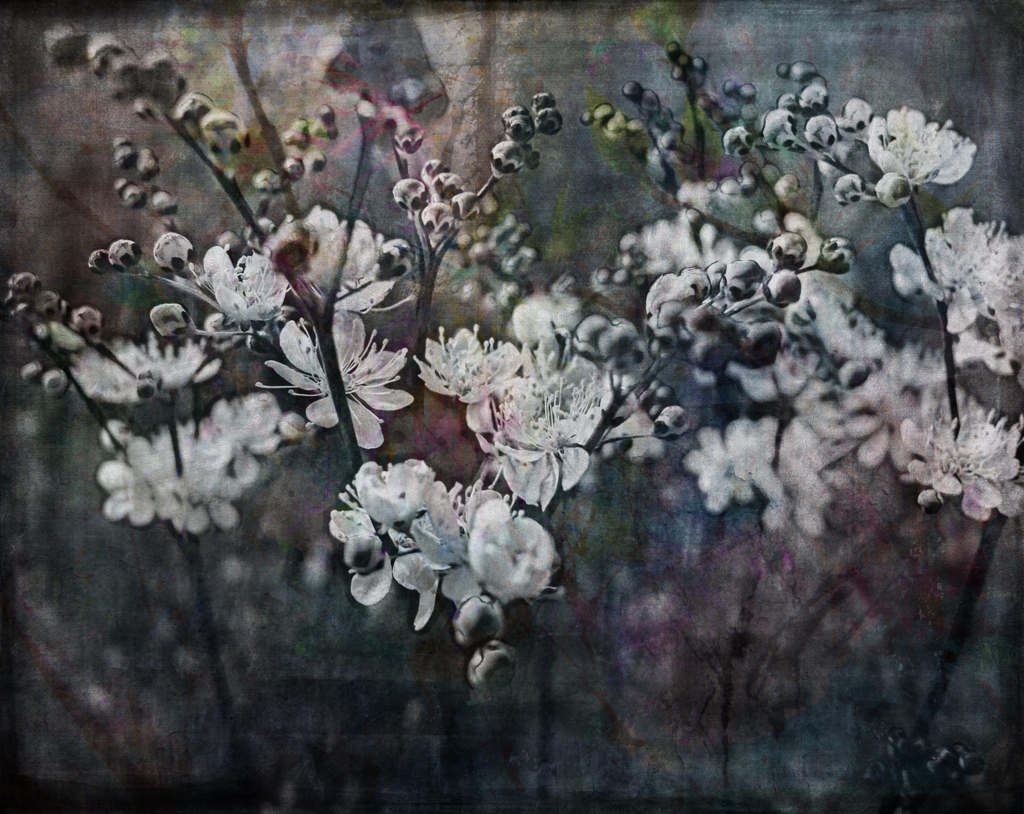 Untitled by mminoguekarlsson