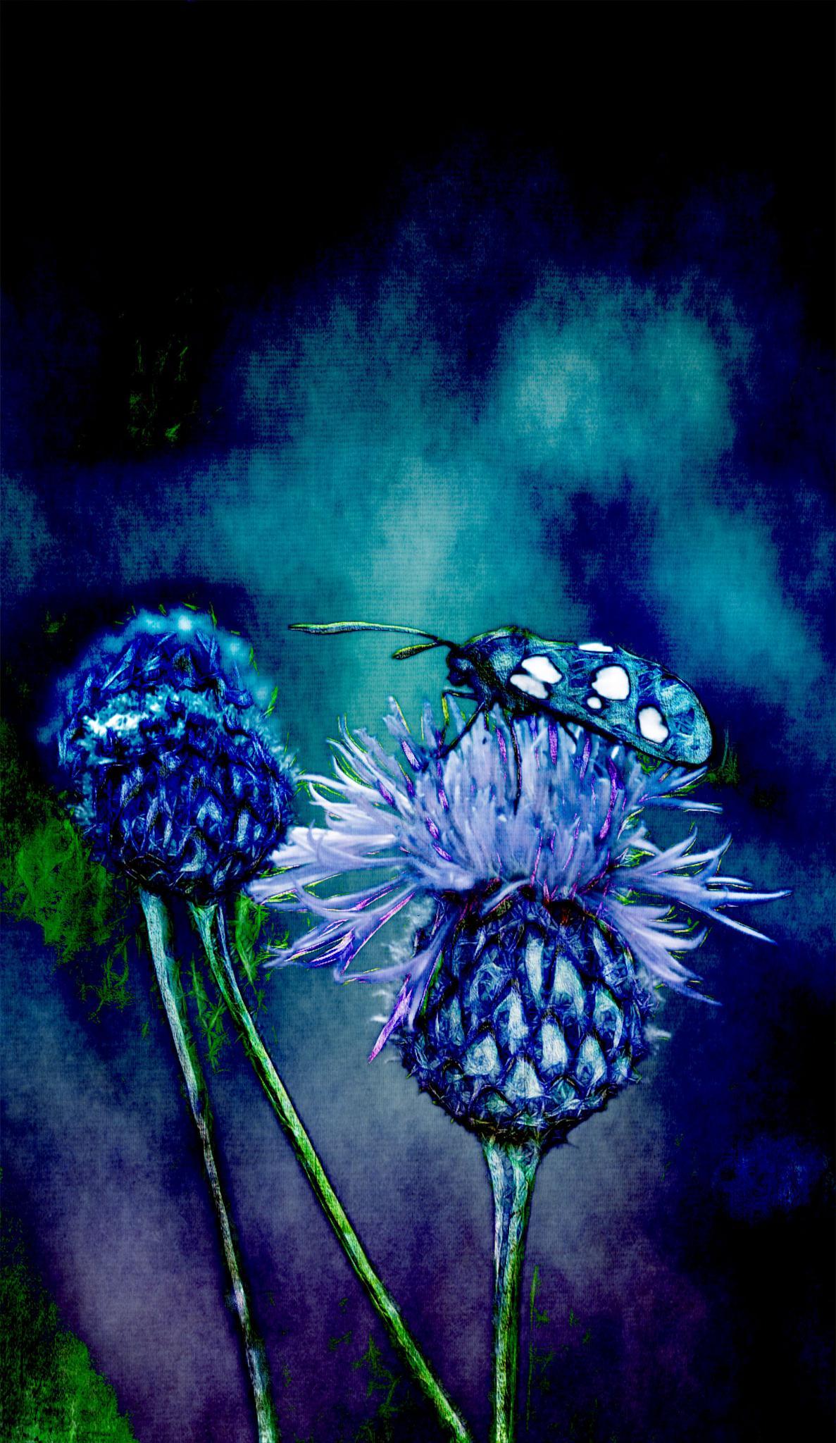 Night Amongst the Plants by mminoguekarlsson
