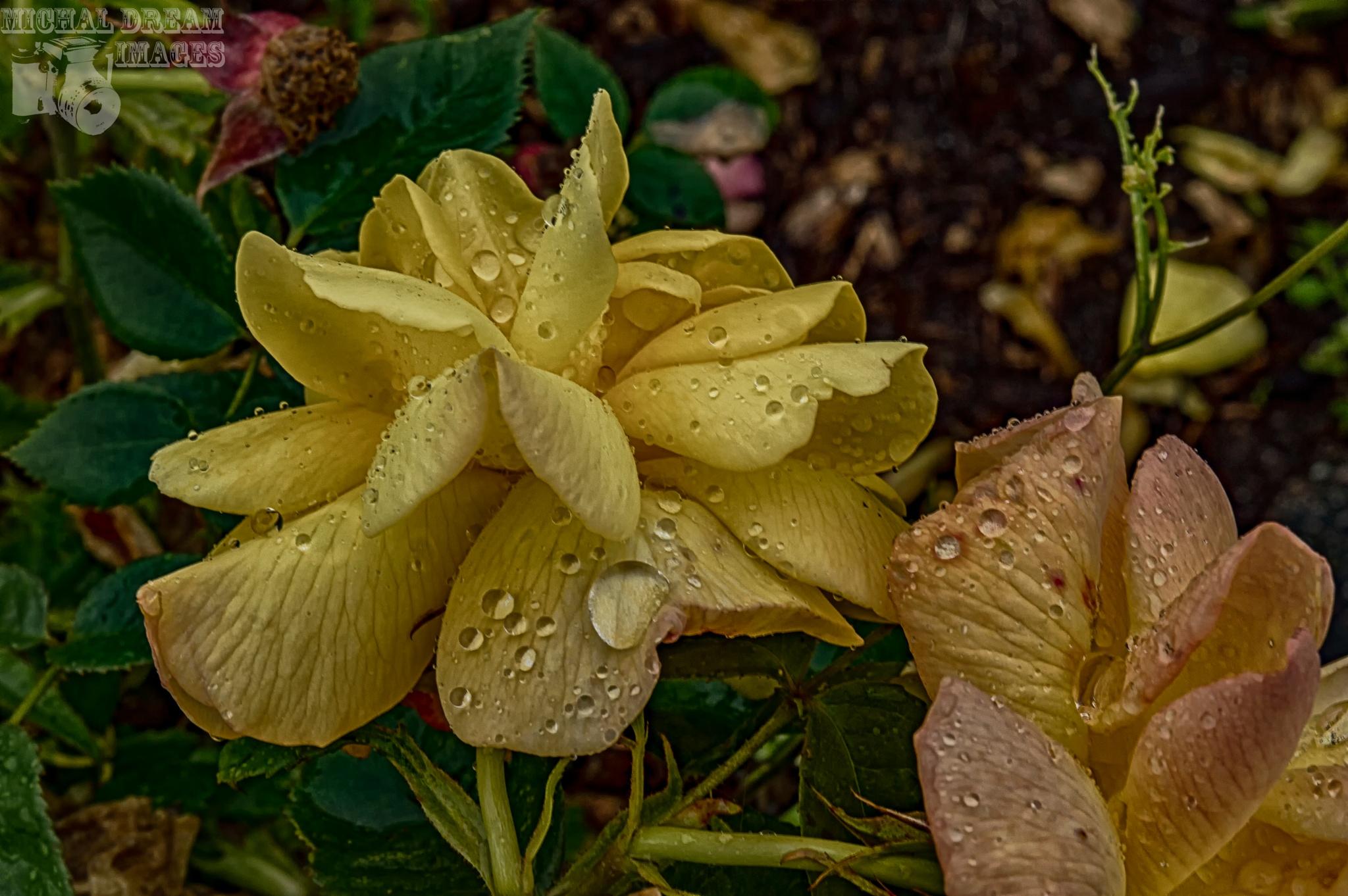 rain drops keep falling  by michal clarke