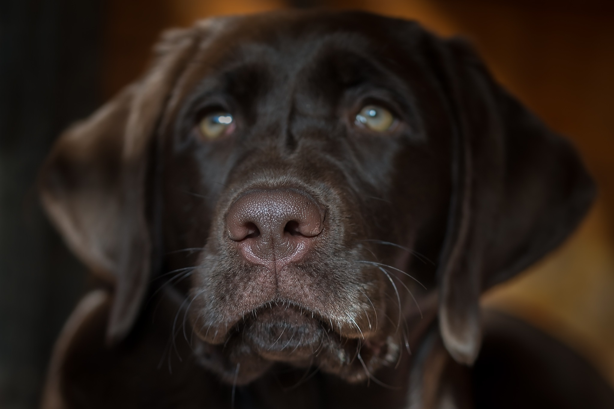wet nose by Leo Walter