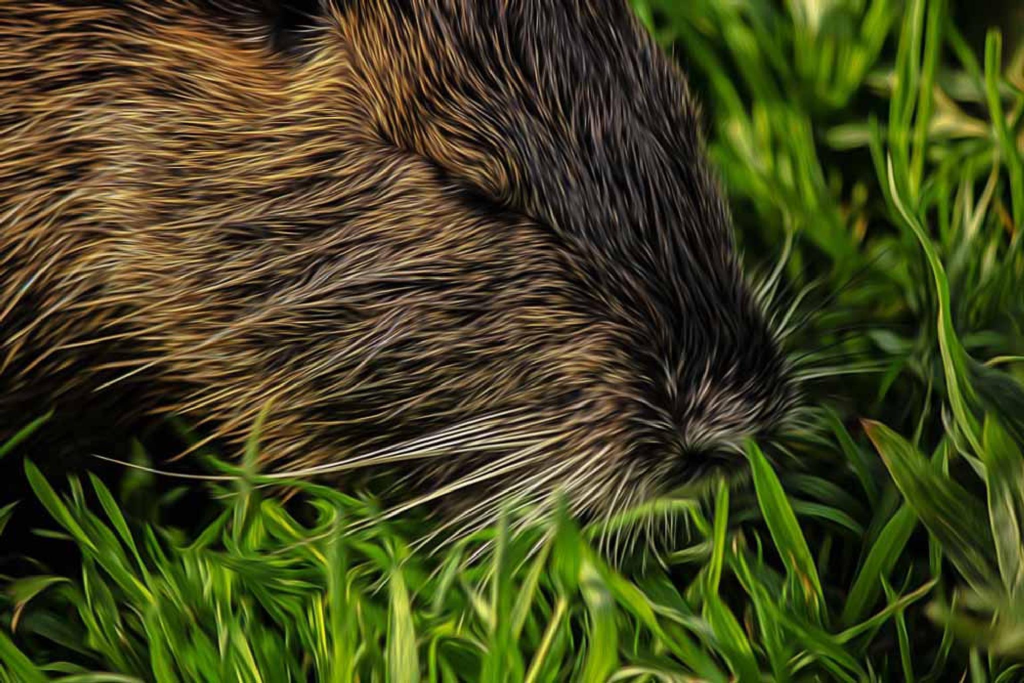 capybara by Myra T.Silva