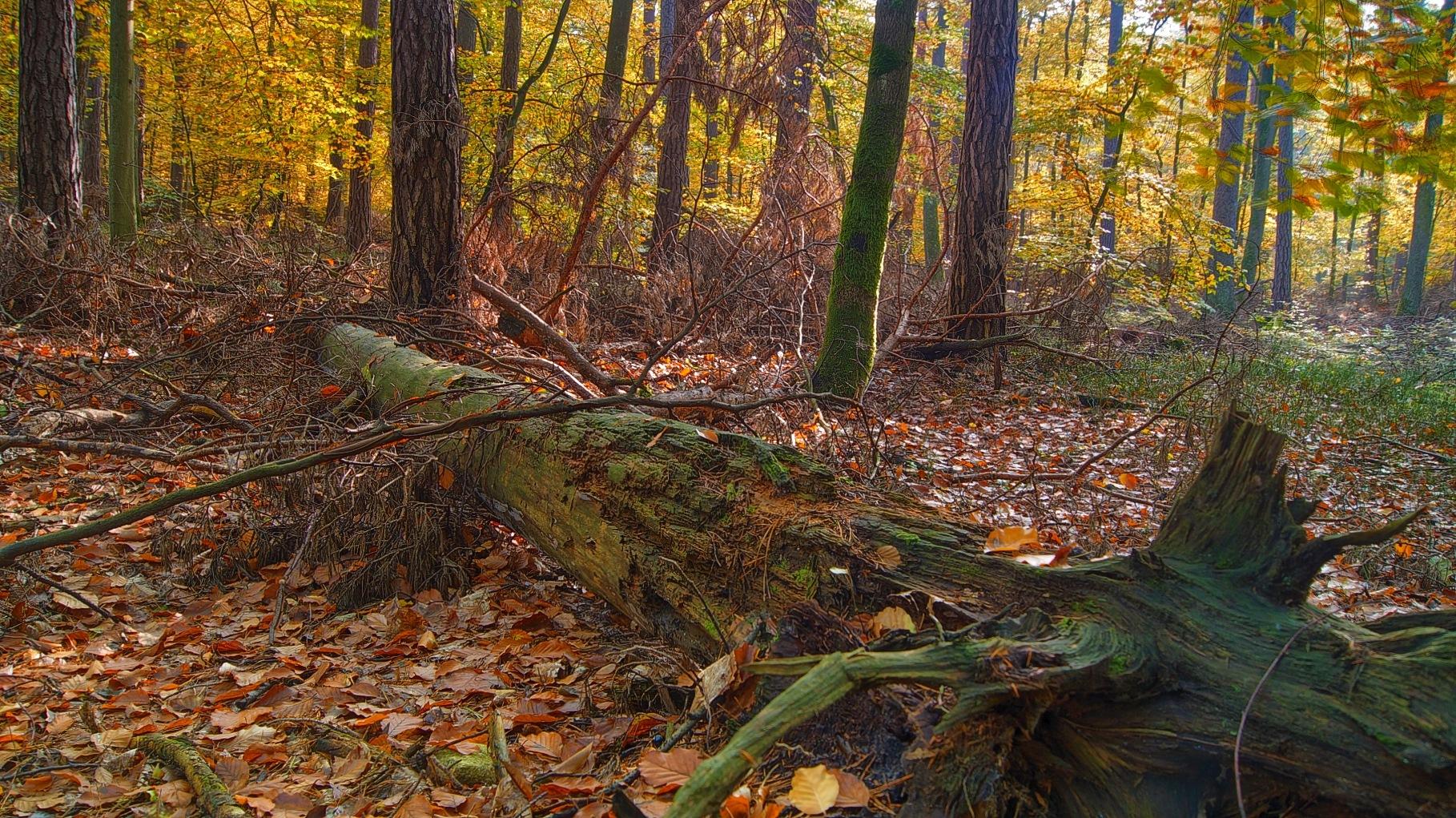 Polish autumn by janeczek