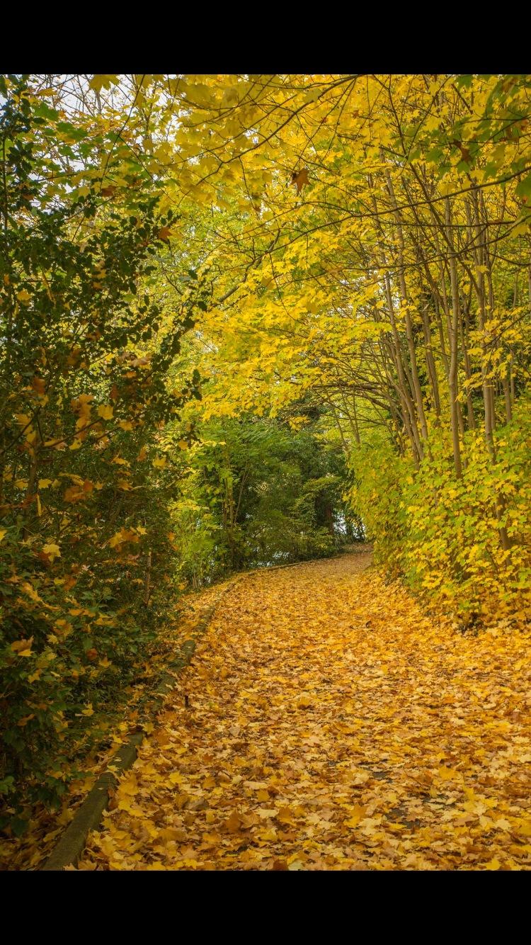 Autumn walk by paul.spencer.39395