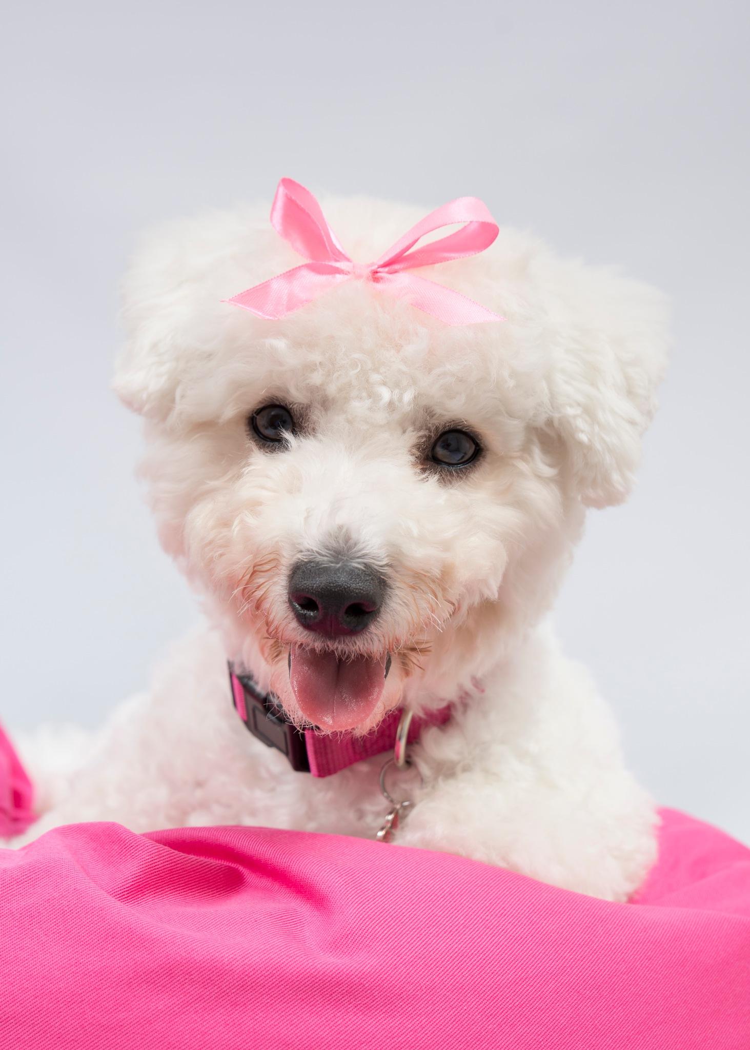 Cute Puppy Alert by paul.spencer.39395