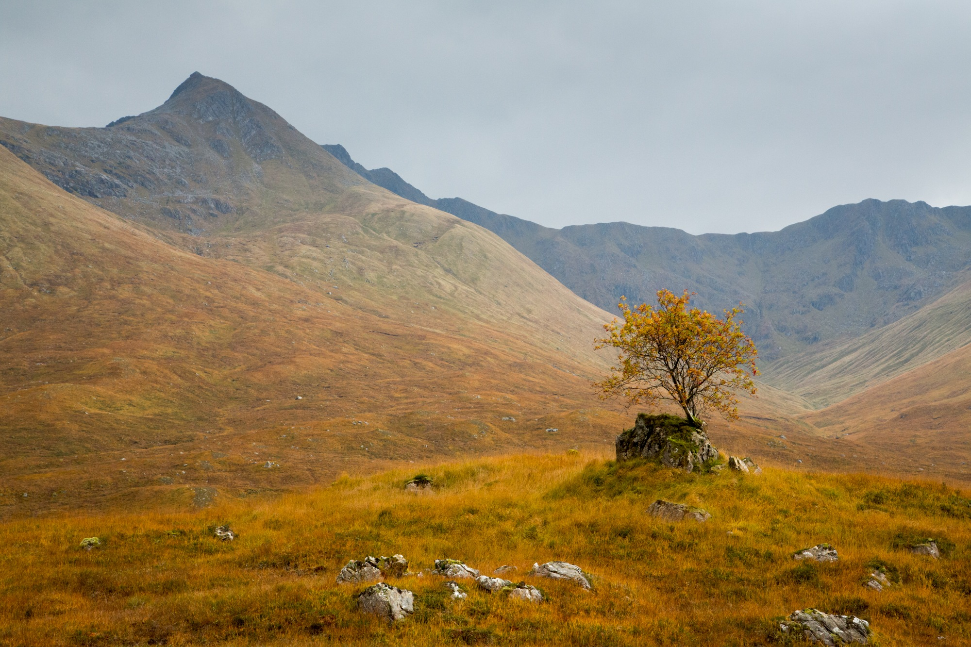 the little tree on a rock by fiona