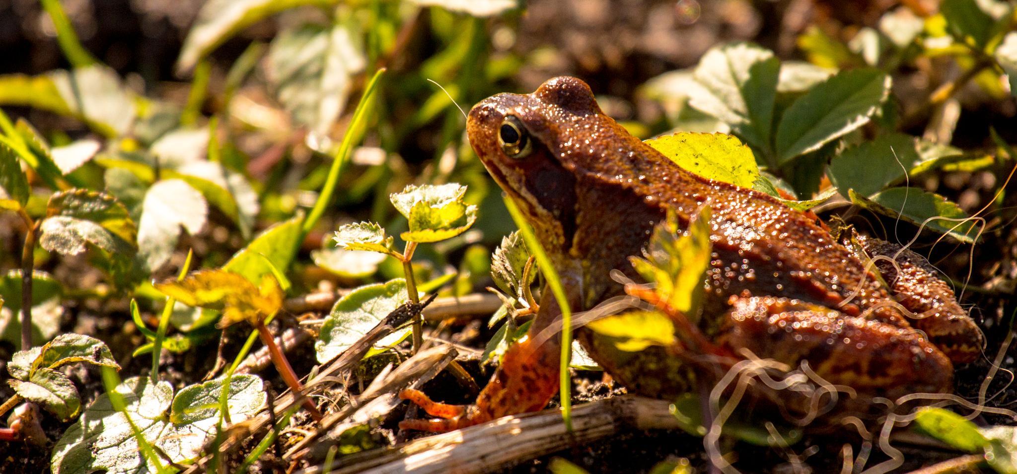 frog by knud erik simonsen
