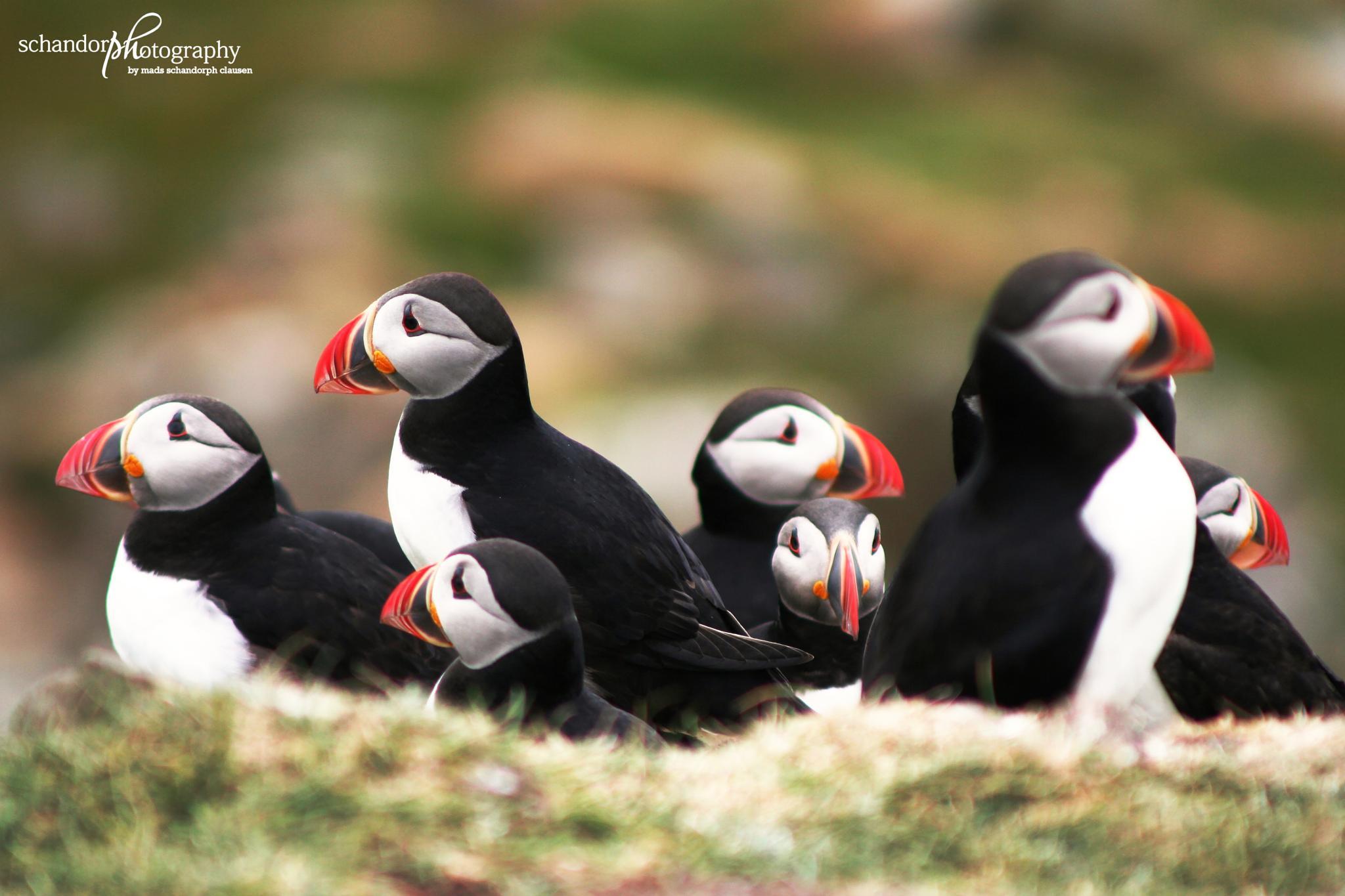 Stick Together - Faroe Islands by Mads Schandorph Clausen