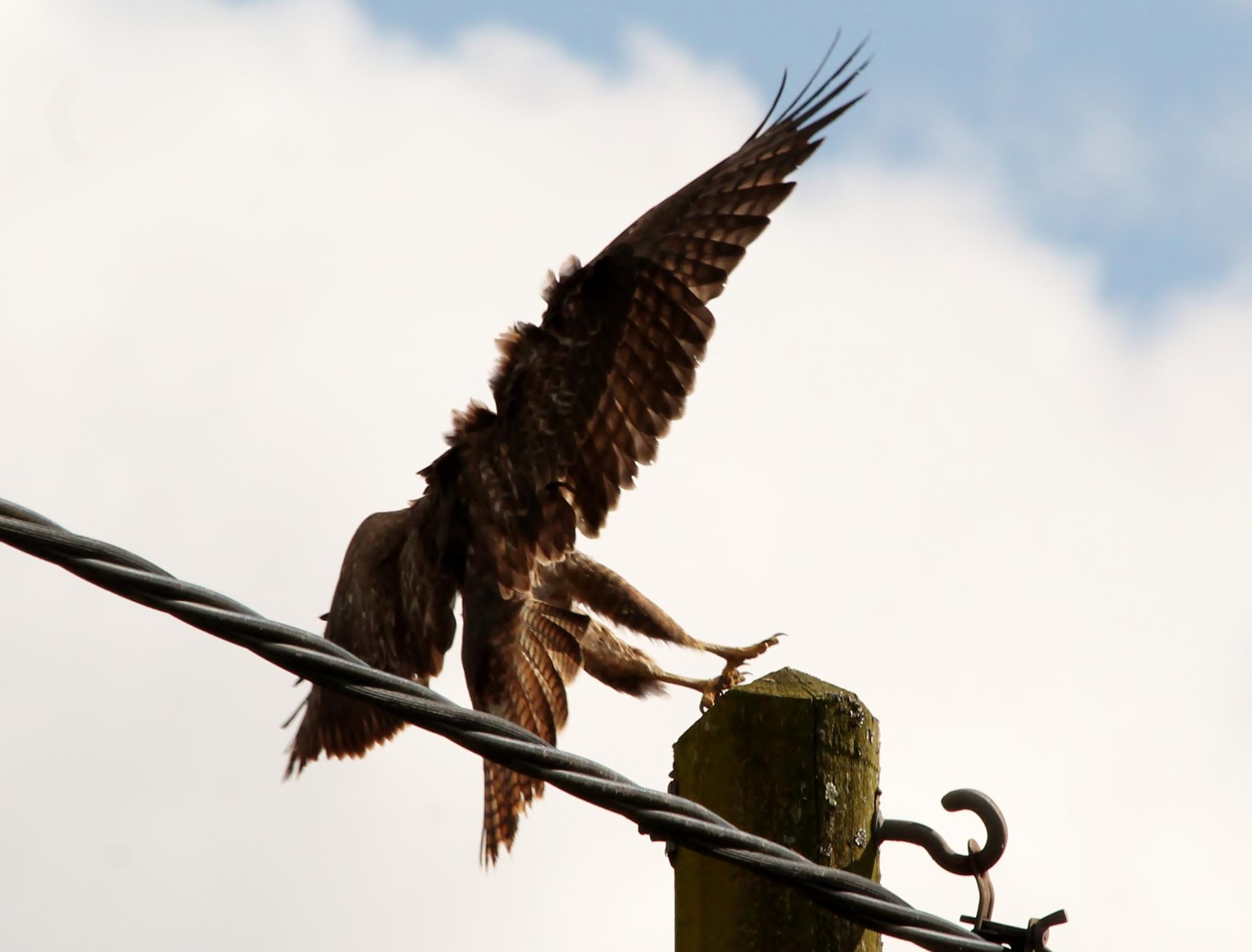 Photo in Animal #wild life #wild birds #birds of prey #new forest #hampshire