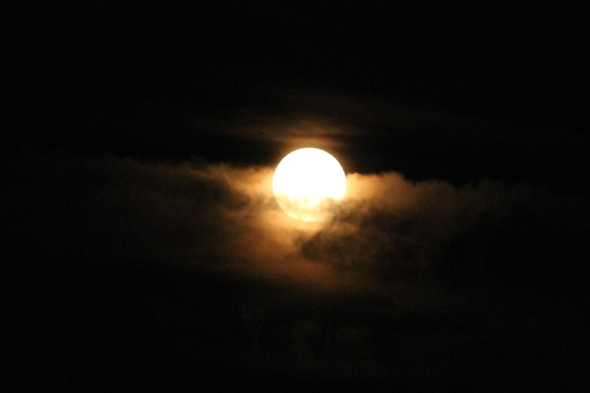 Misty moon by Ali Sarre