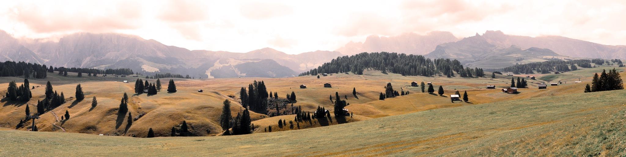 grassland  SEISERALM by maurizio senoner