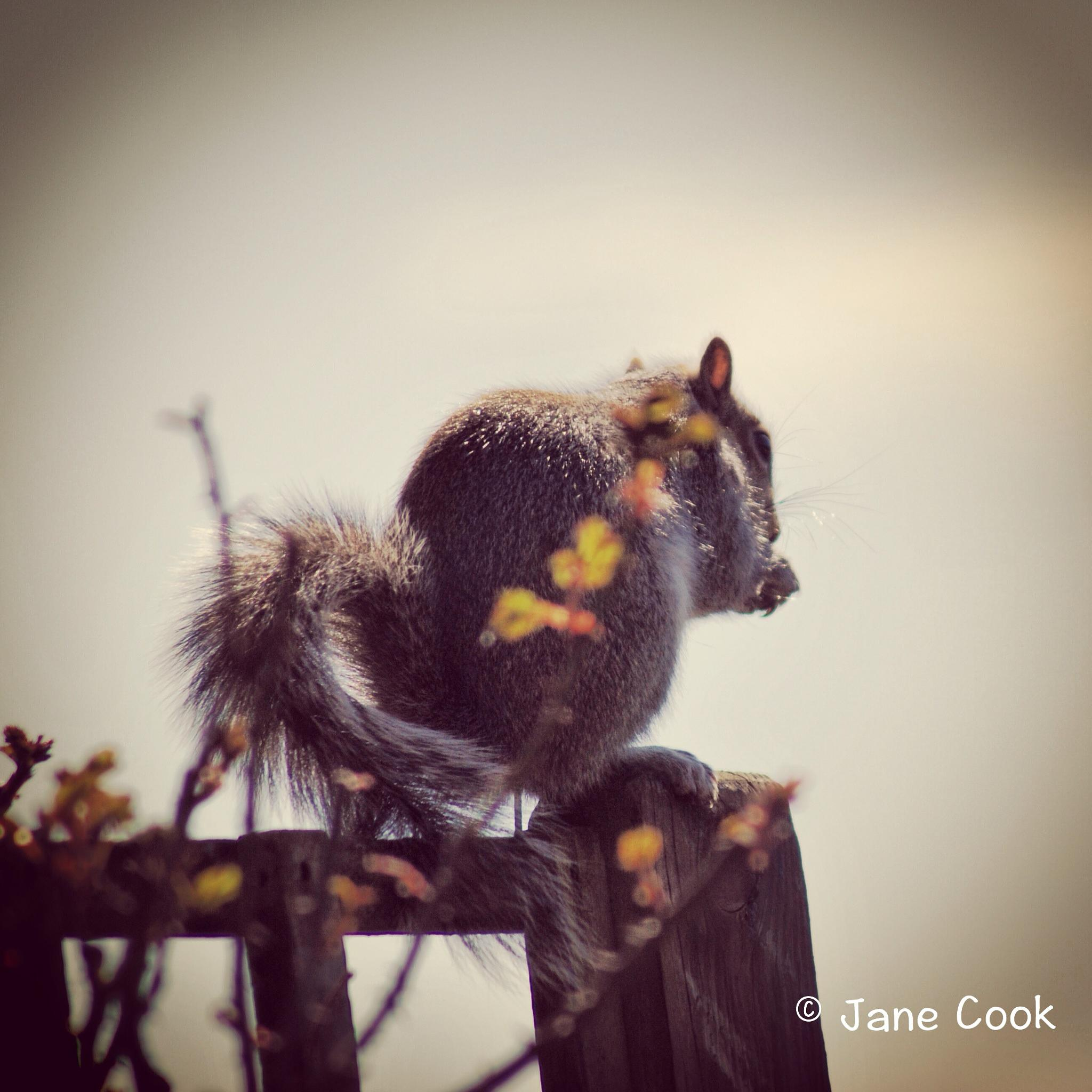 Squirrel by Jane Cook