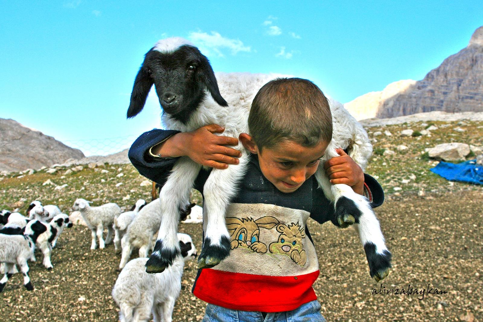 küçük çoban by alirizabaykan