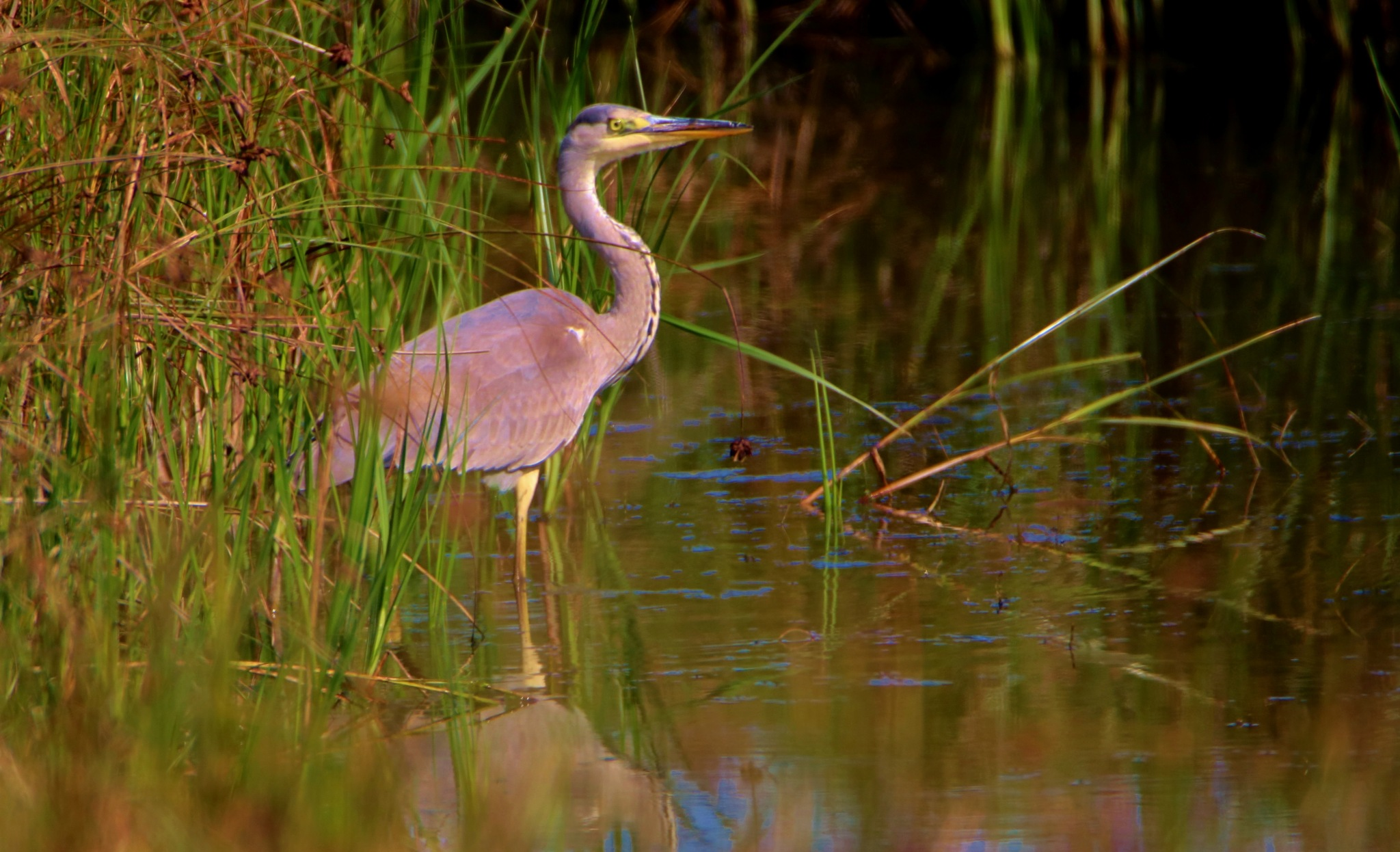 Heron 3 by Dave Griffin Photography.