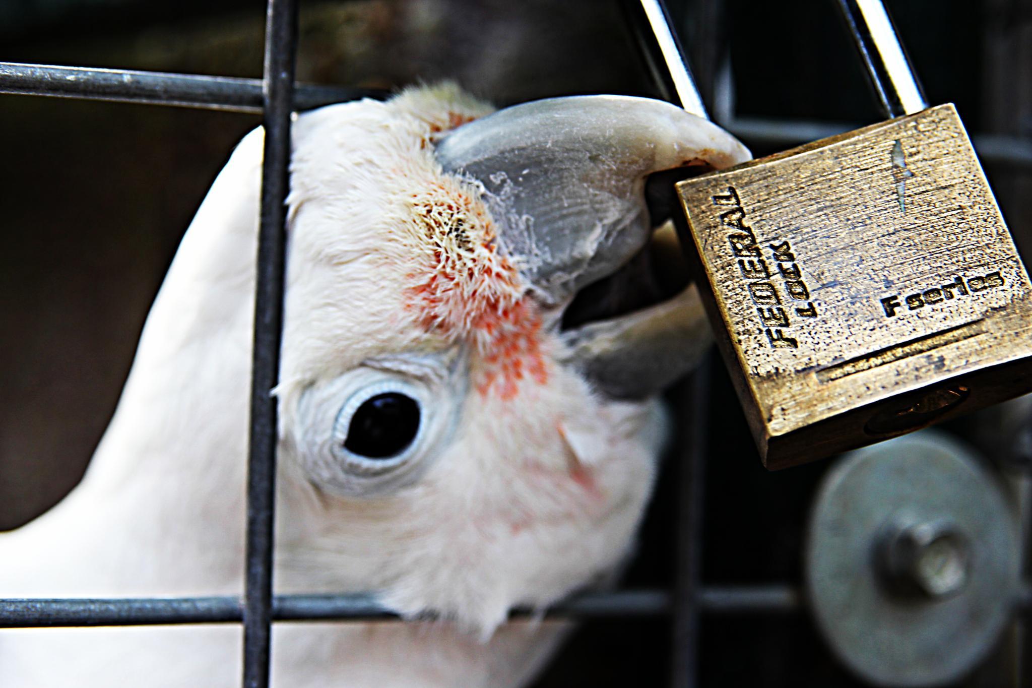 Unlock Please by david.pichler