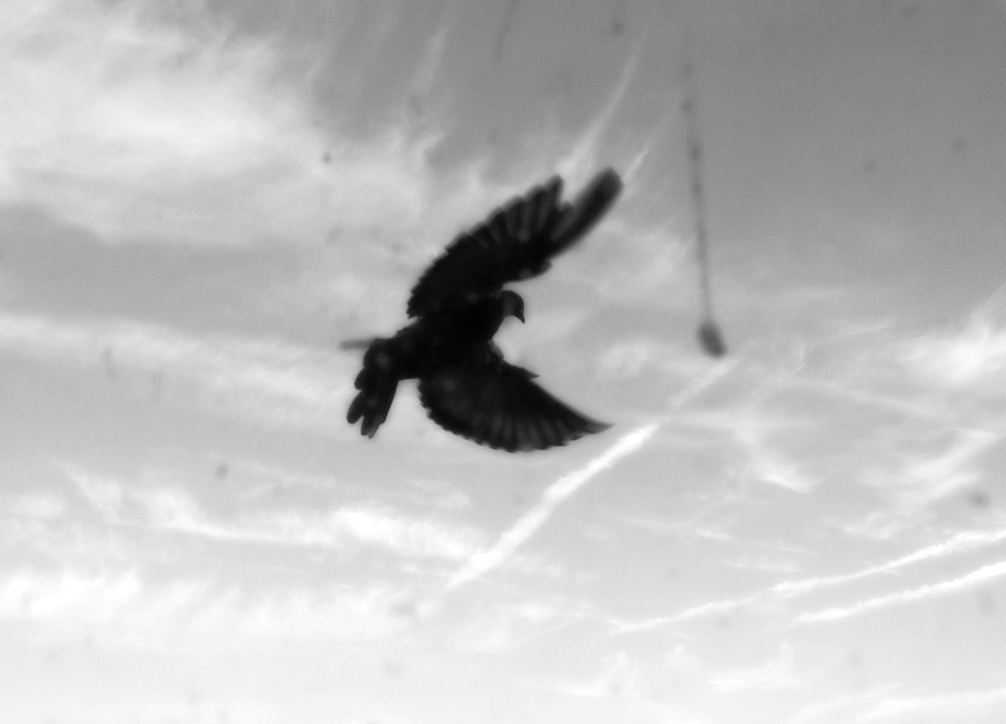 Flying by david.pichler