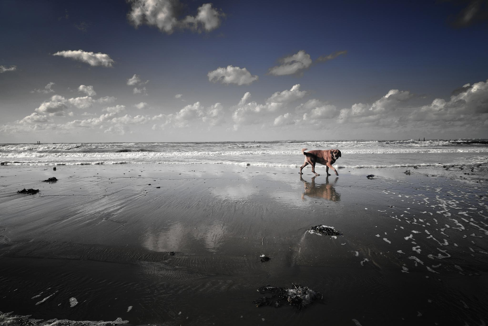 Alone  by Rudi.Fonteijne