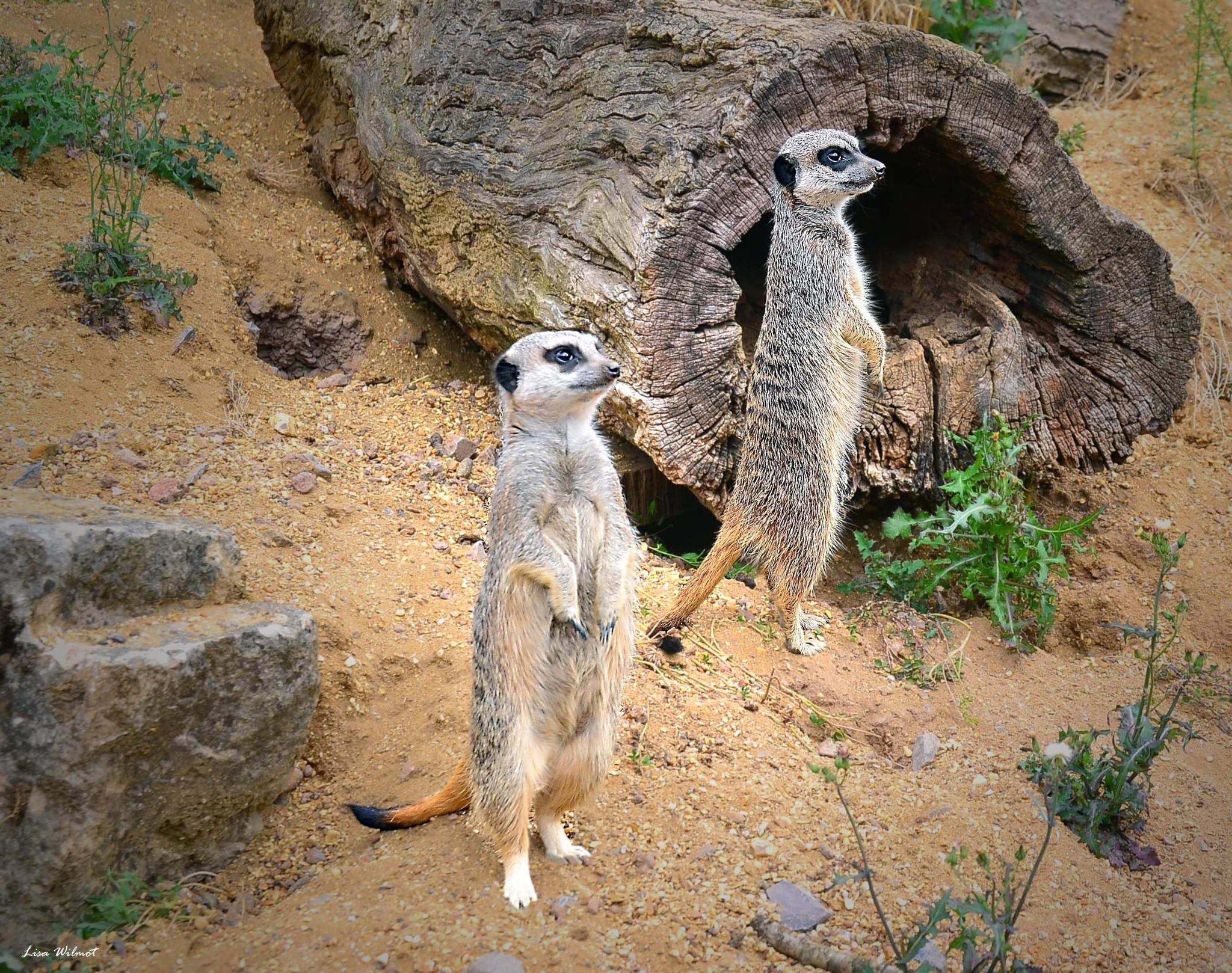 Hey.... Did you see that!! by Lisa Wilmot