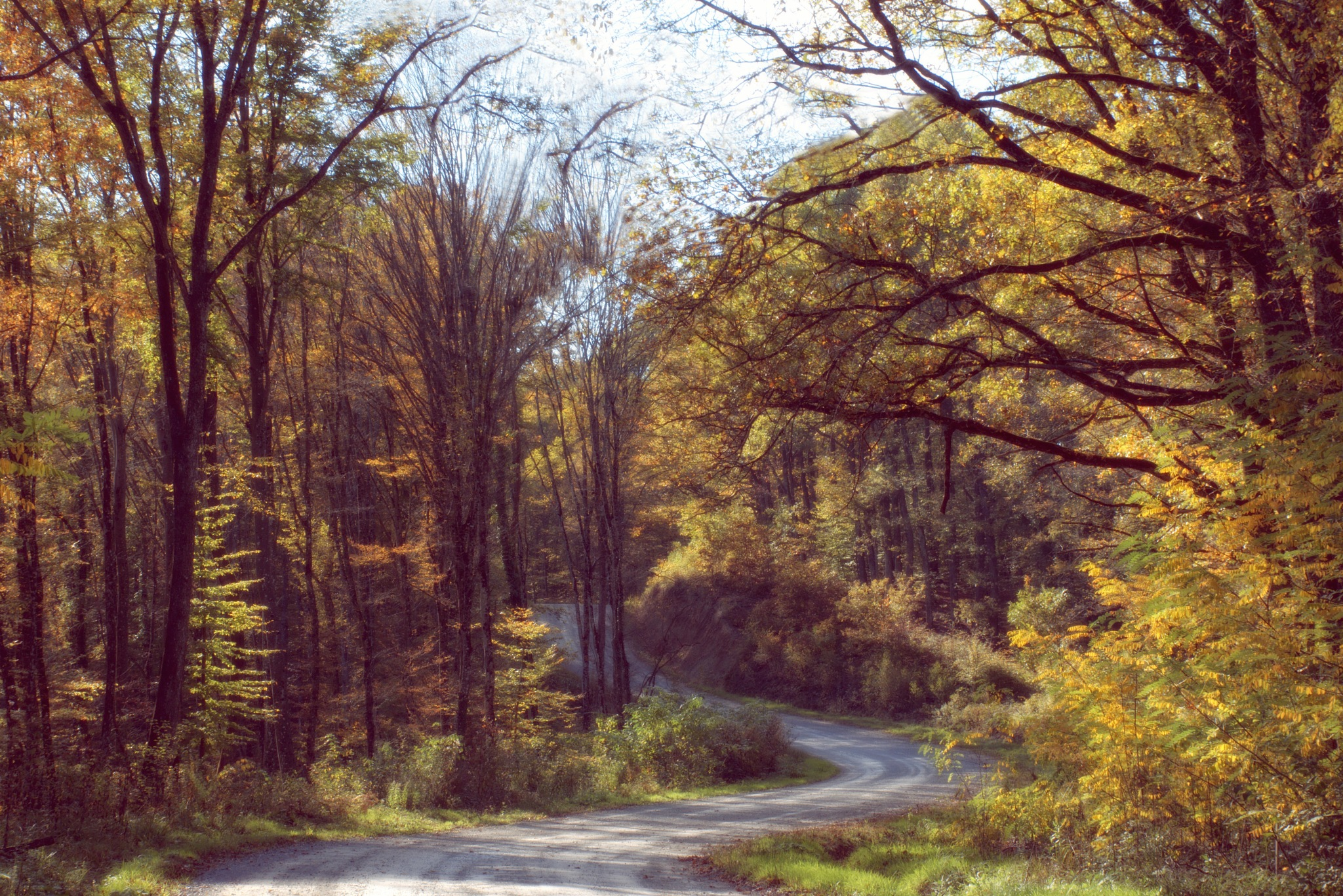 Forest in the fall by nada.gr.