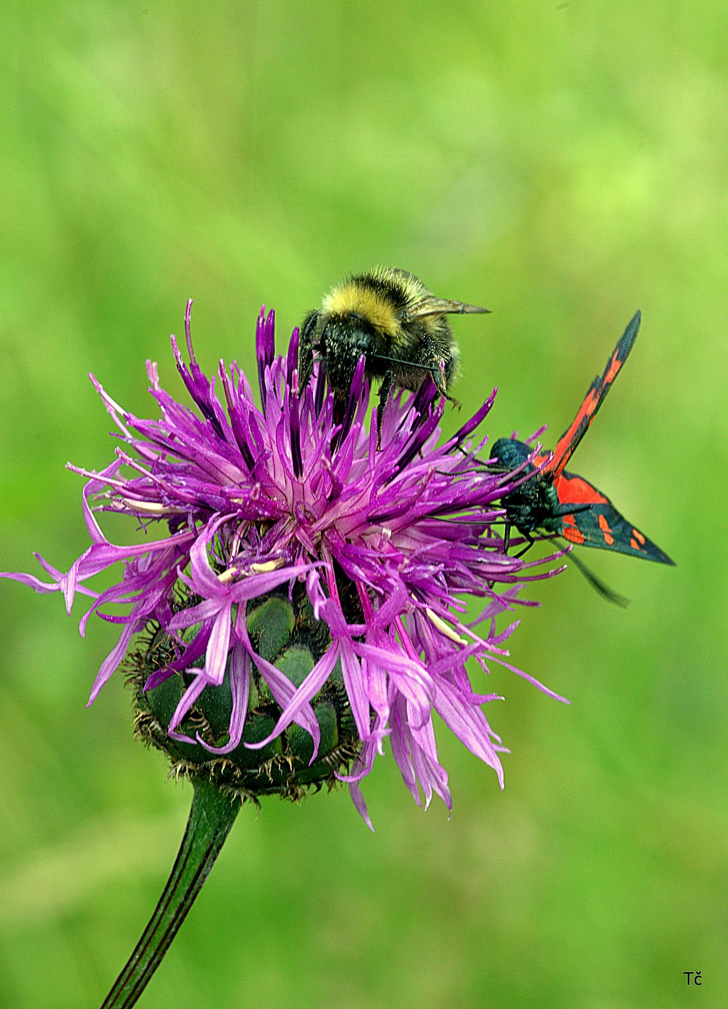 Crowdy flower by leopold.brzin