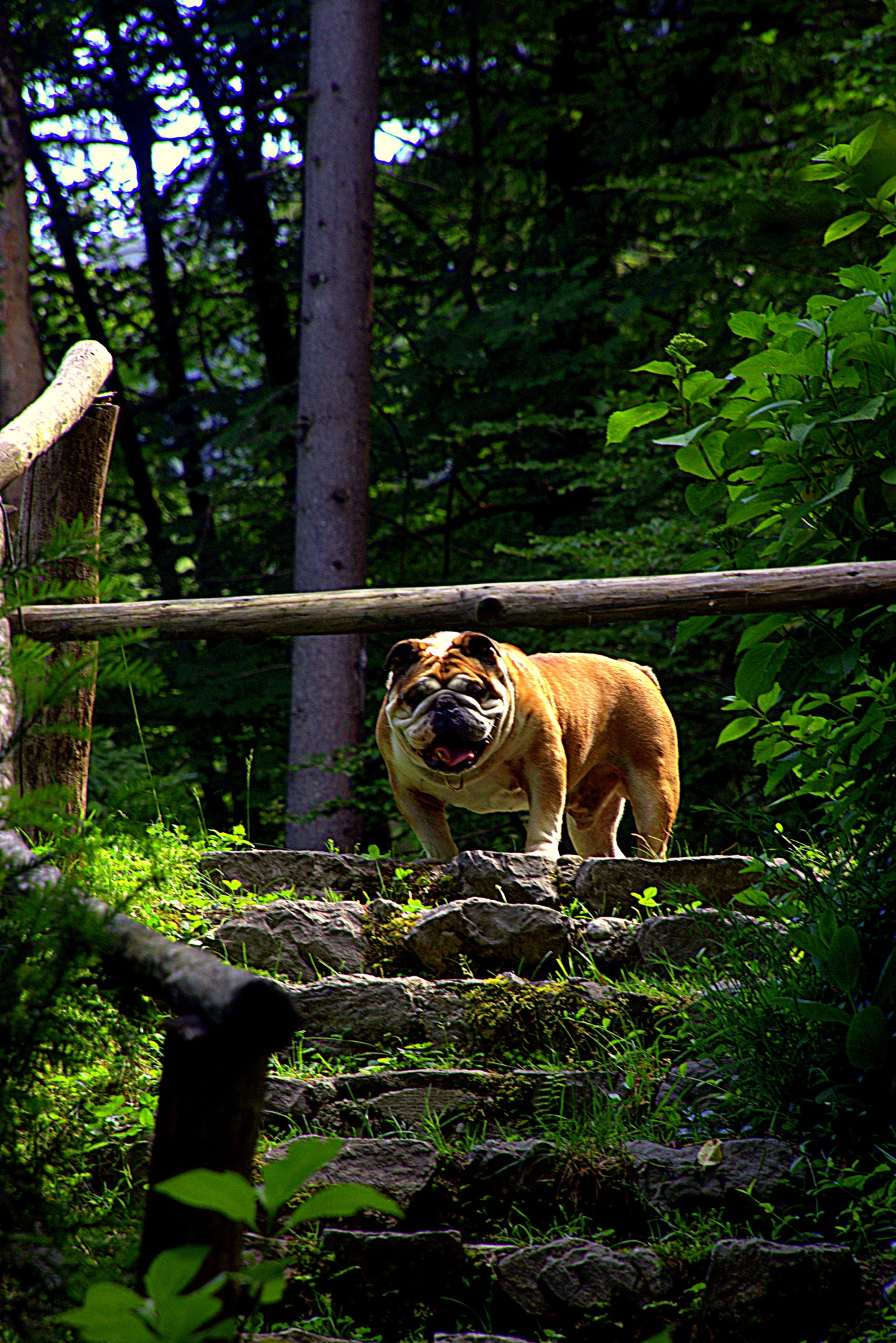 Photo in Animal #forest walk #steps #dog
