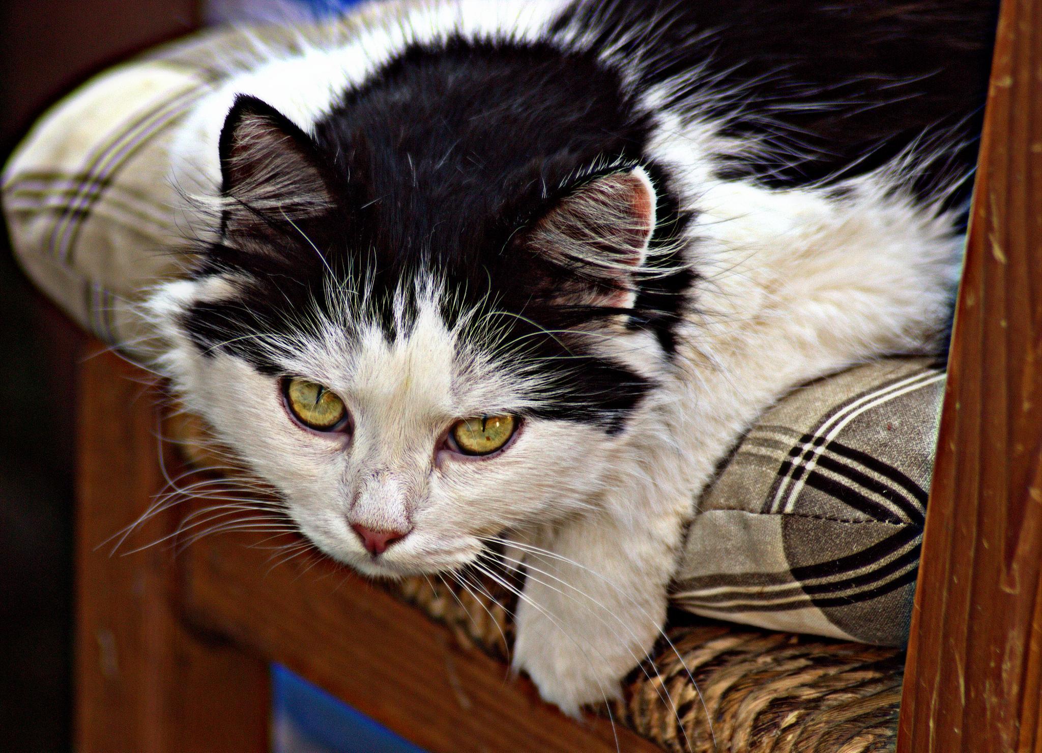 CAT is always grateful to klick ... by leopold.brzin
