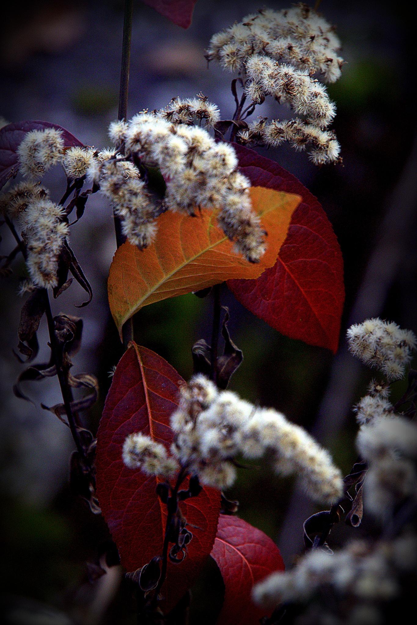 Autumn detail .. by leopold.brzin