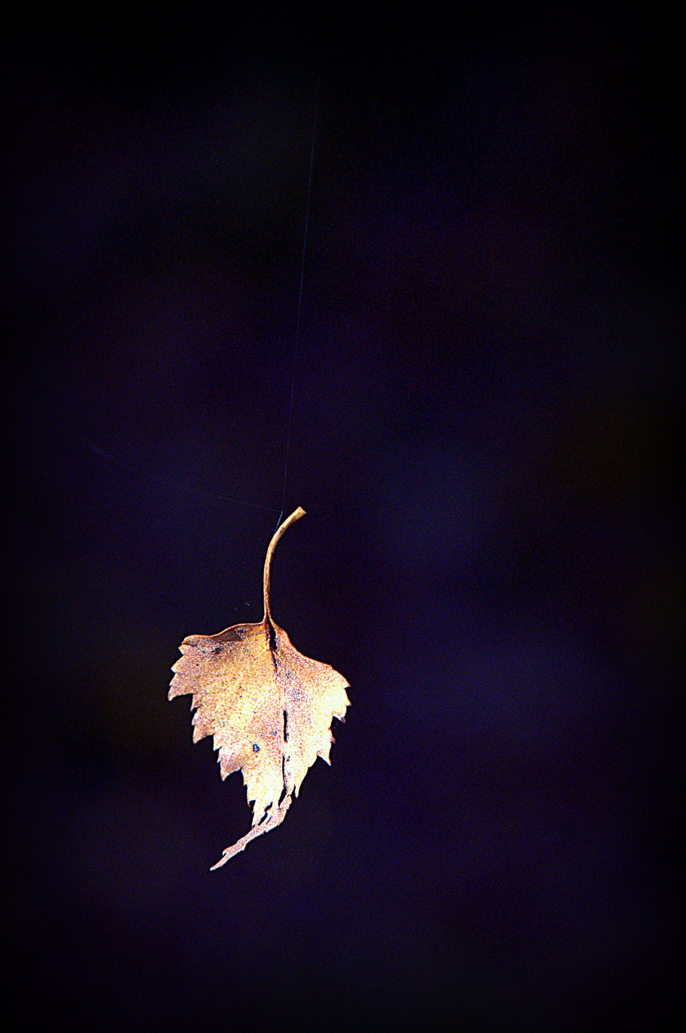 The last leaves are falling .. by leopold.brzin