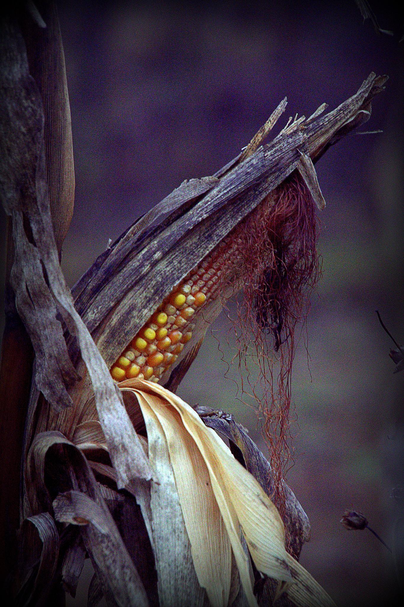 Landscape - remnants of food venison by leopold.brzin