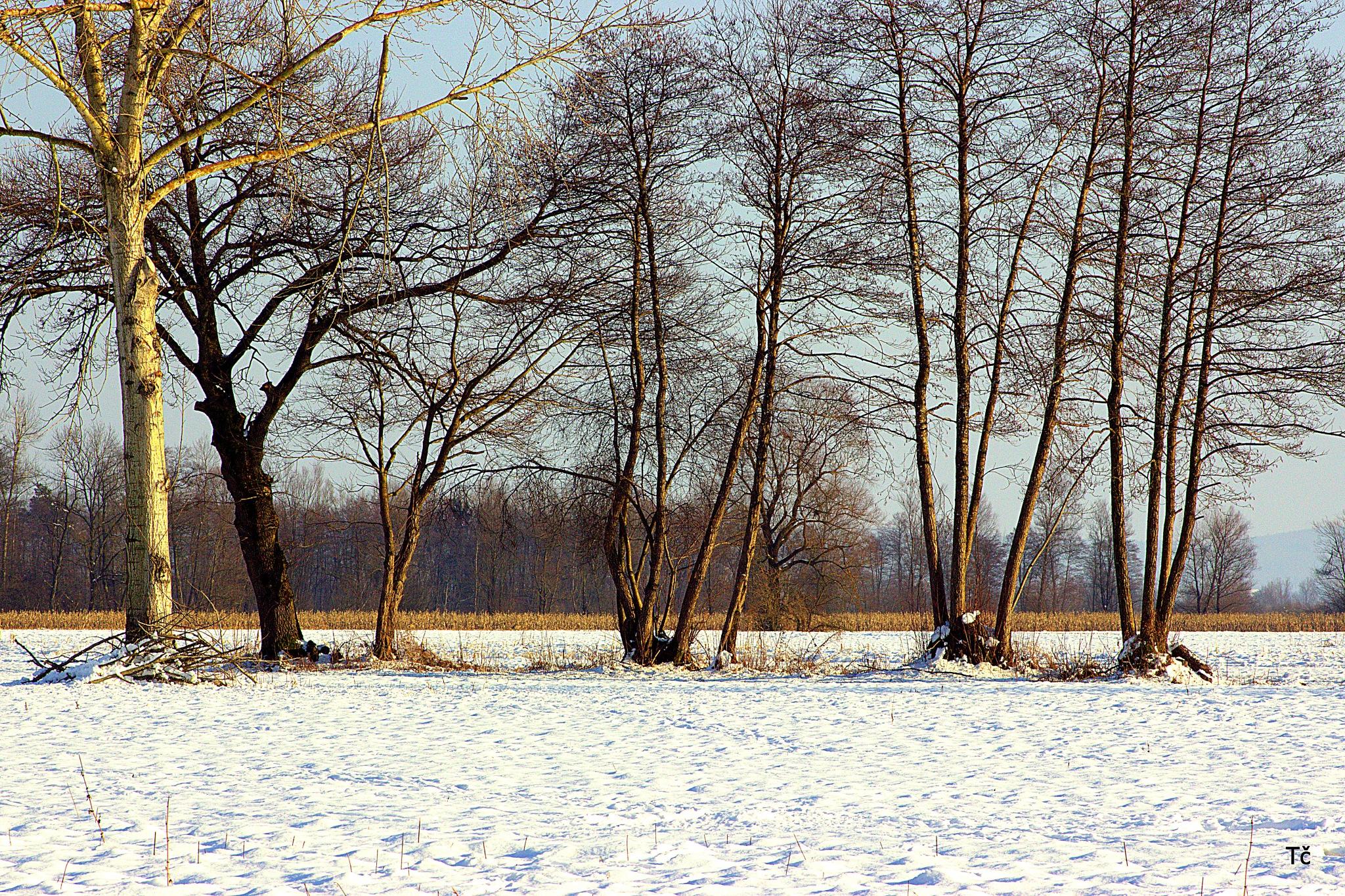Ljubljana Marshes in a beautiful winter day by leopold.brzin