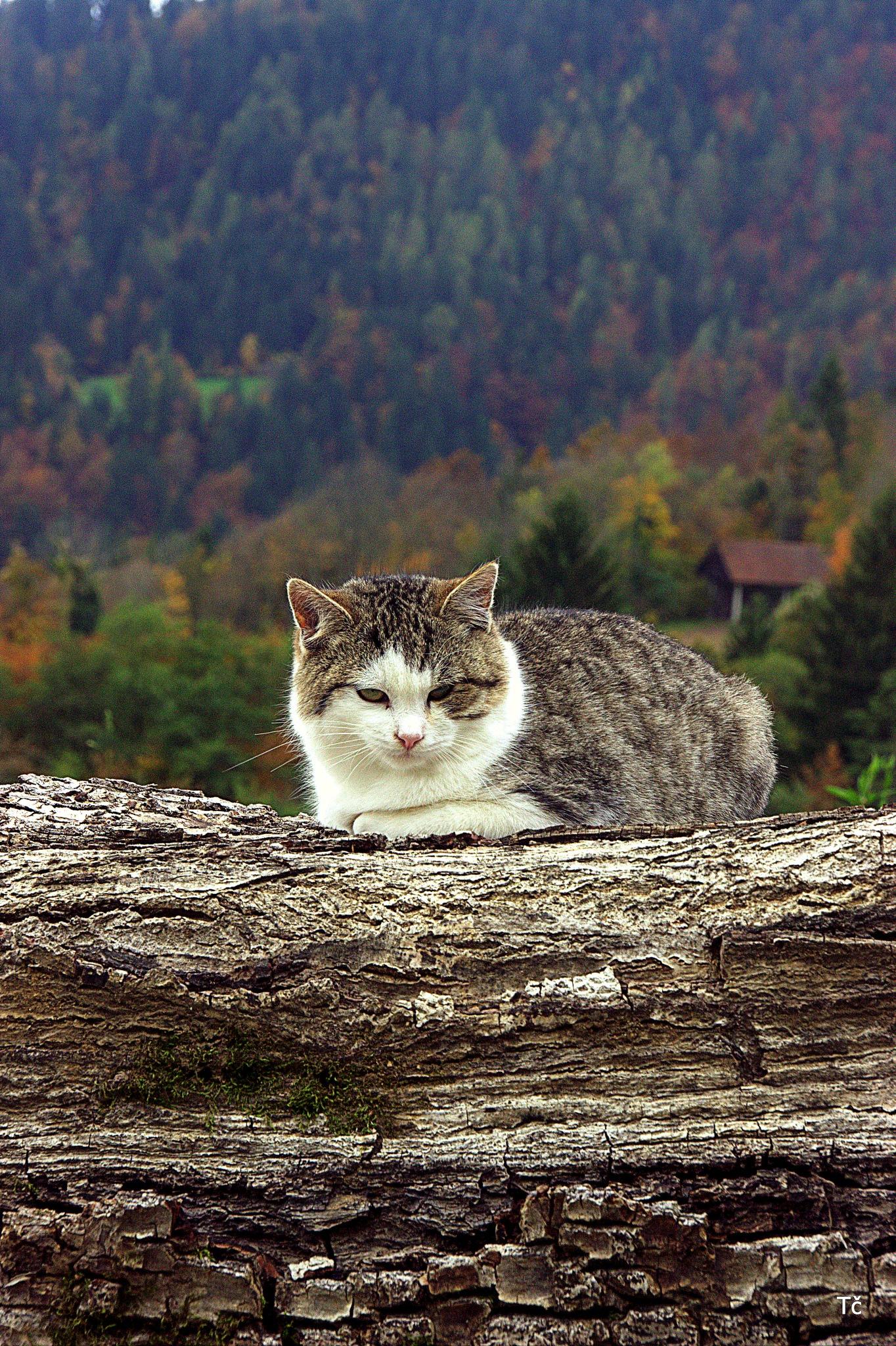 Cat enjoying the autumn scenery by leopold.brzin