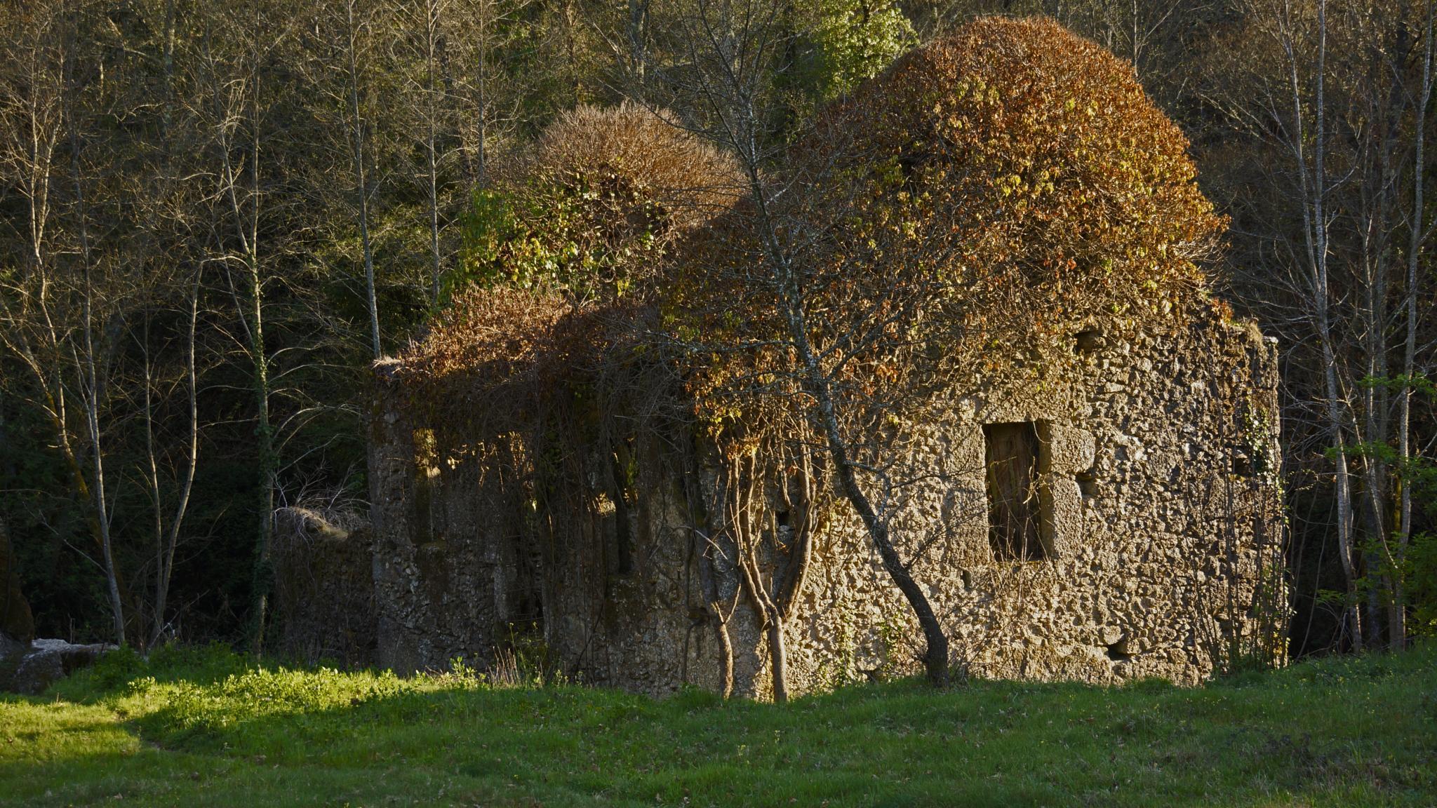 Abandoned house by Fernando B