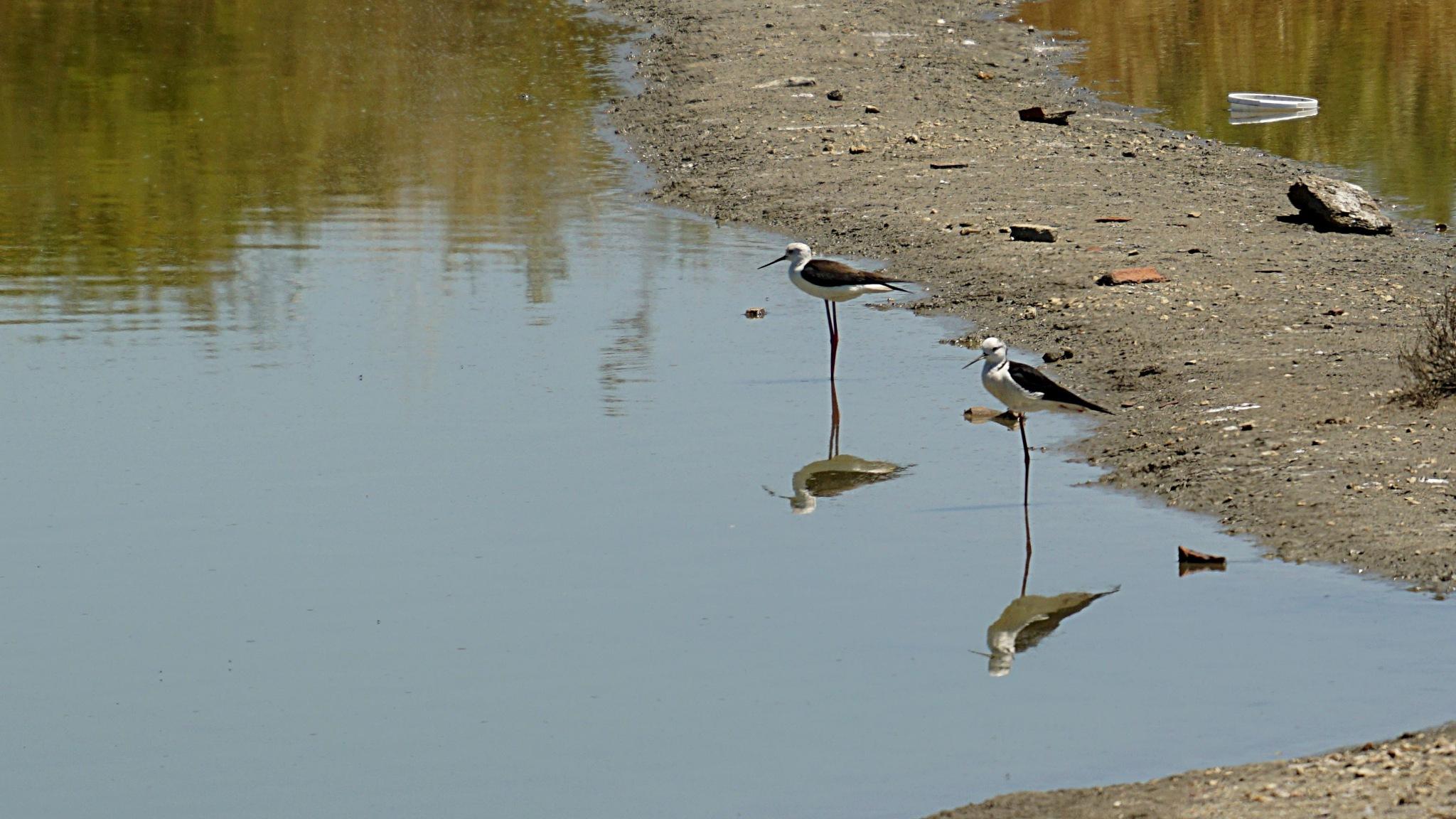 Birds by Fernando B