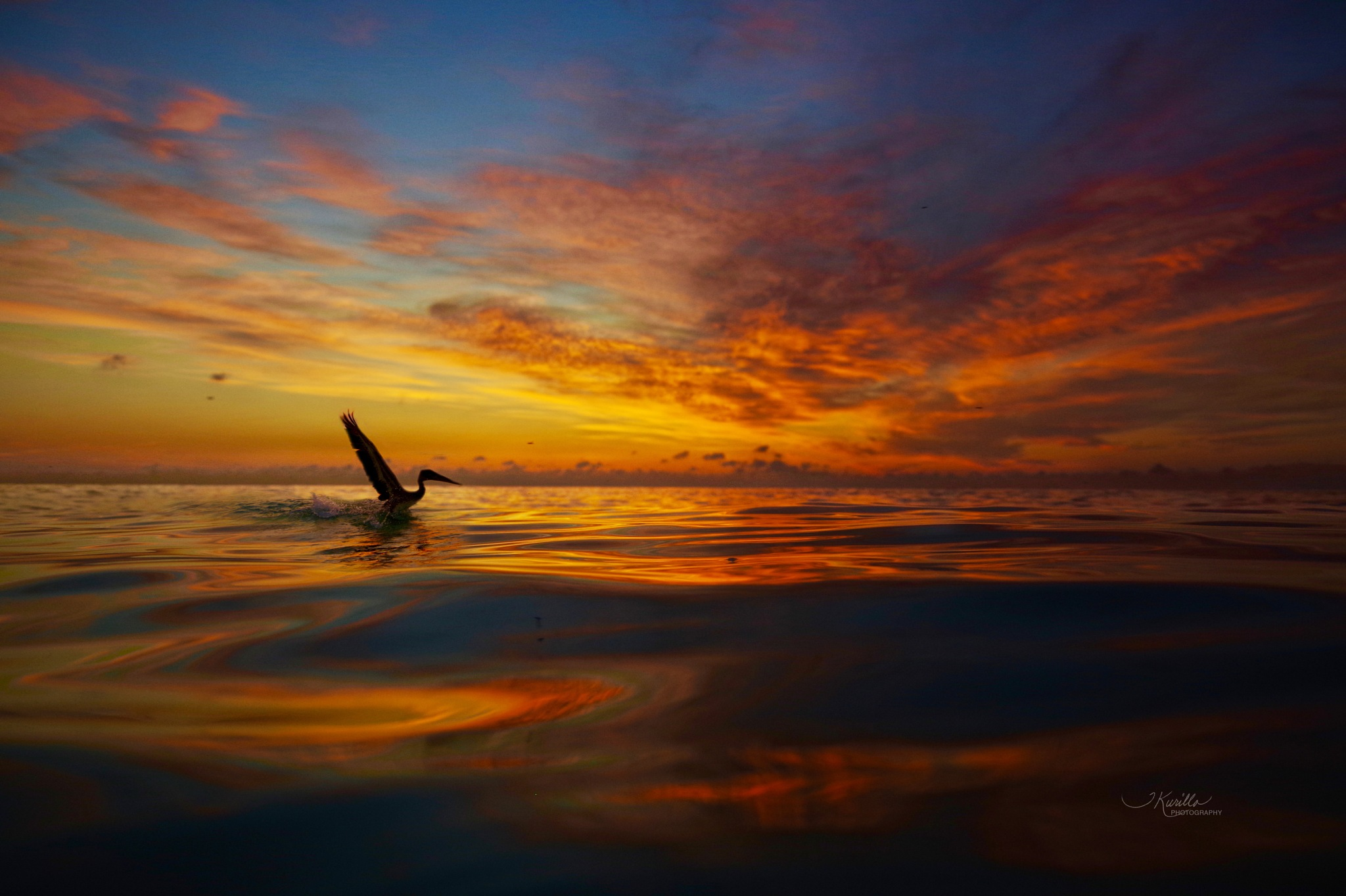 Pelican take off at dawn by tracey.kurilla