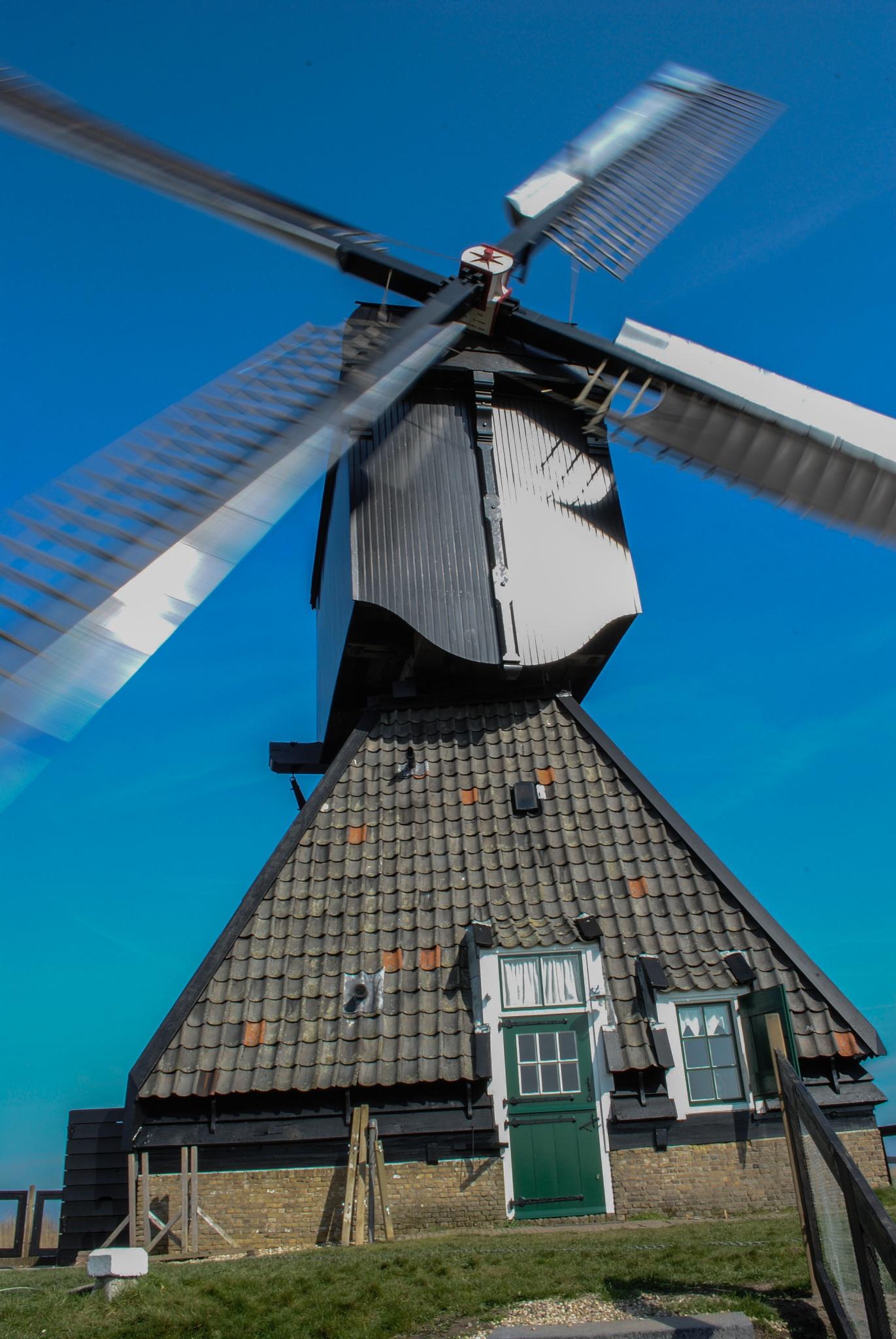 The wind is blowing by Petra van Gend