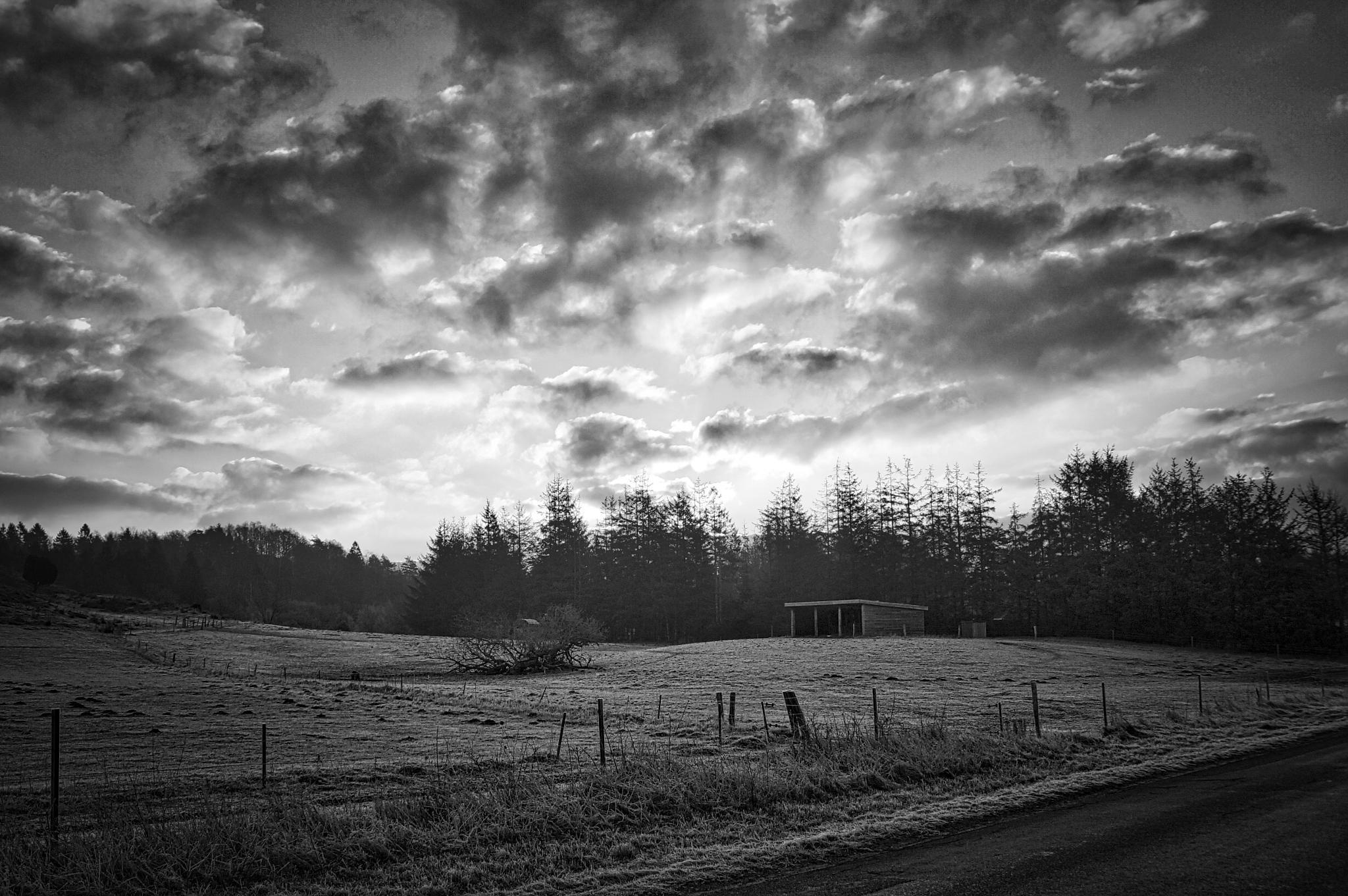 Morning BW by MollerNielsen