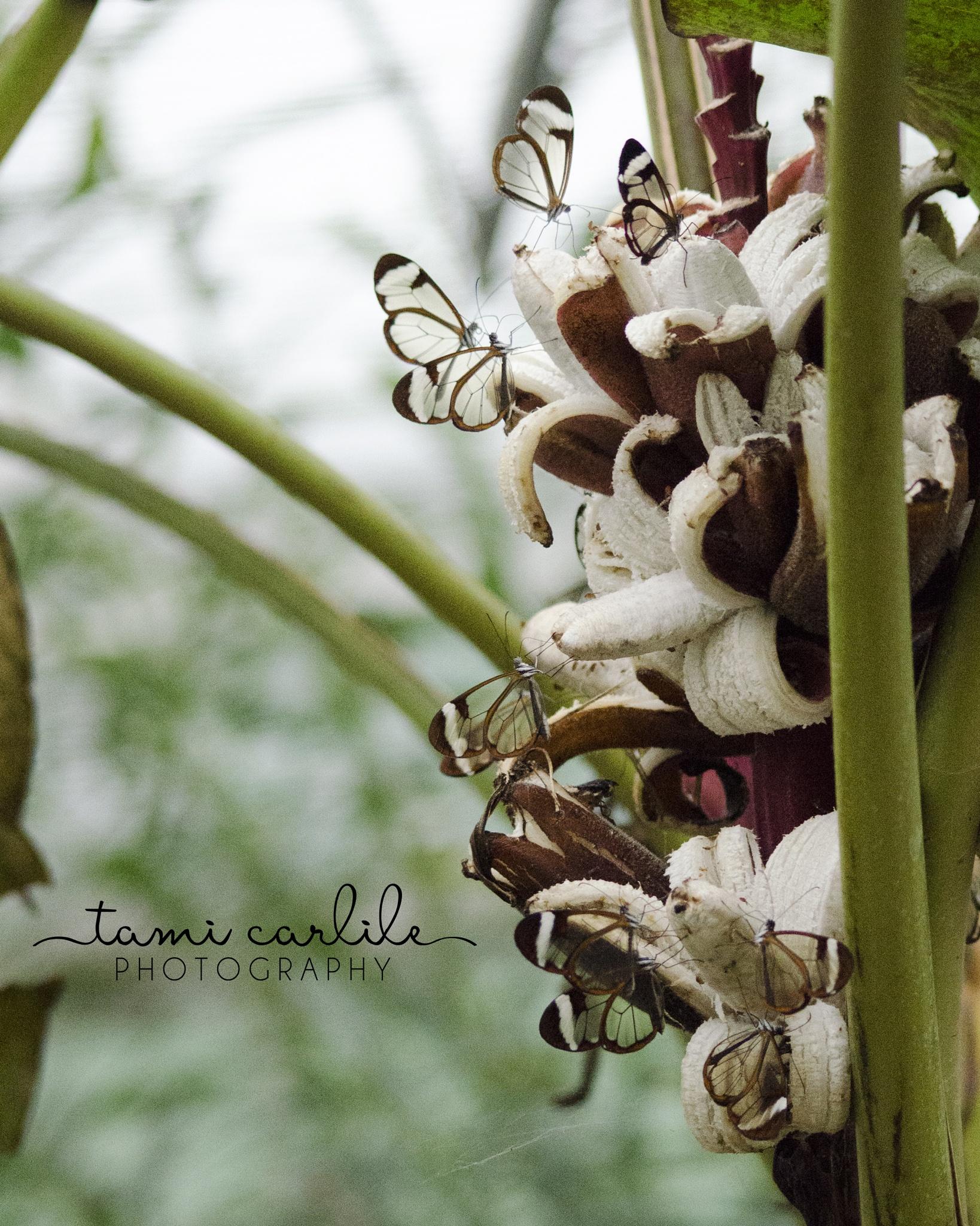 butterflies by tamara.james.75