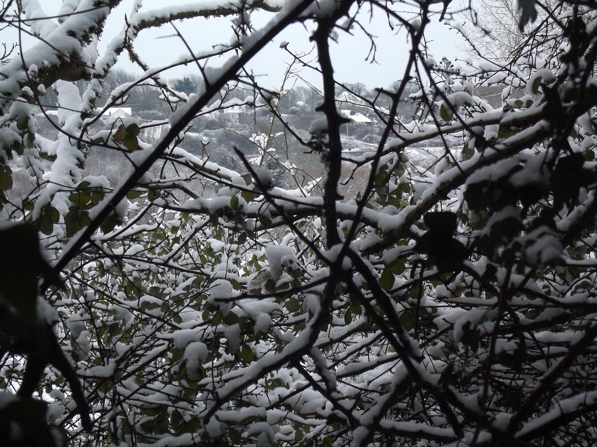 through a snowy tree.. by tim.wells.79