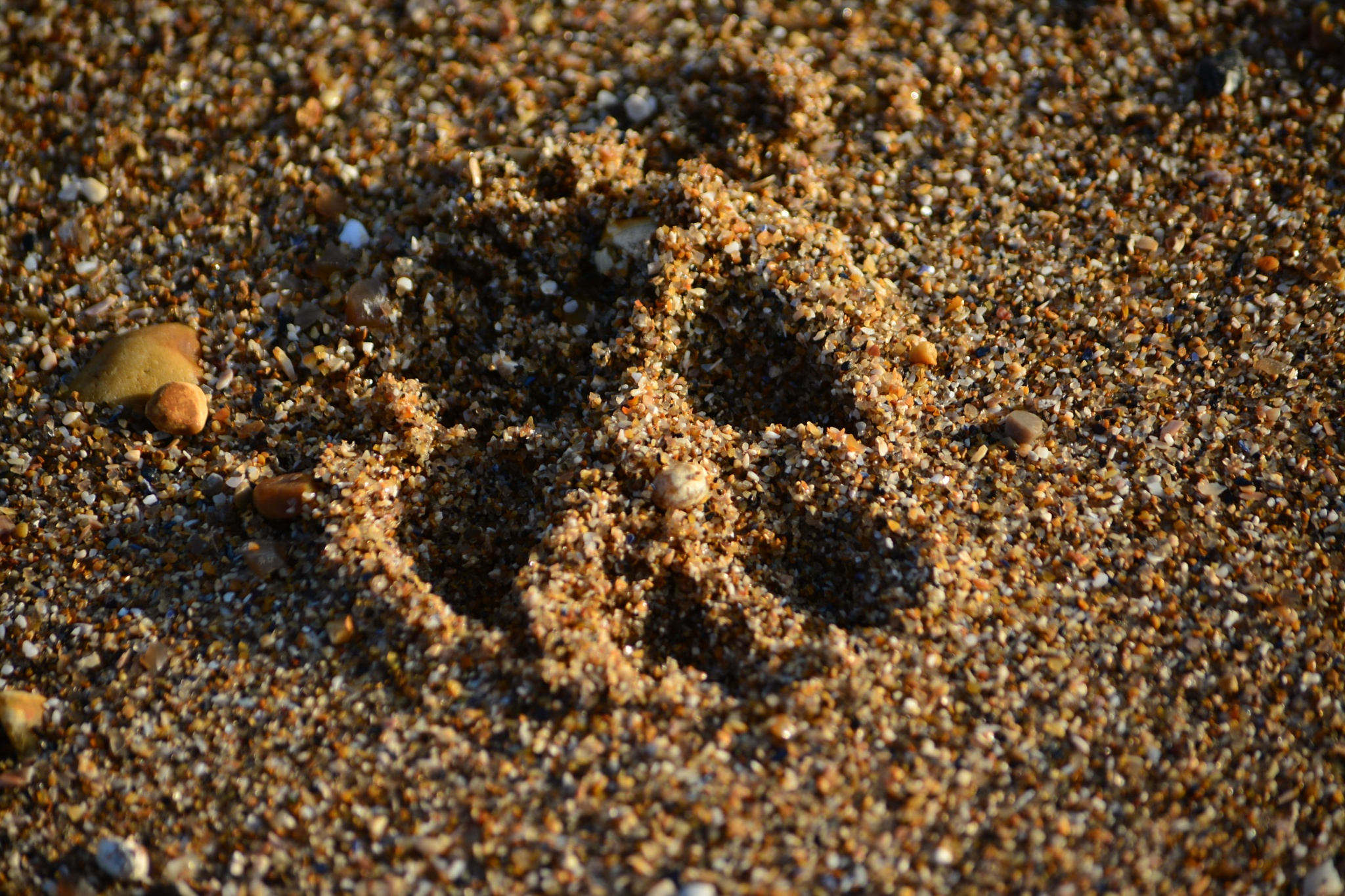 Wolf print in the sand by tim.wells.79