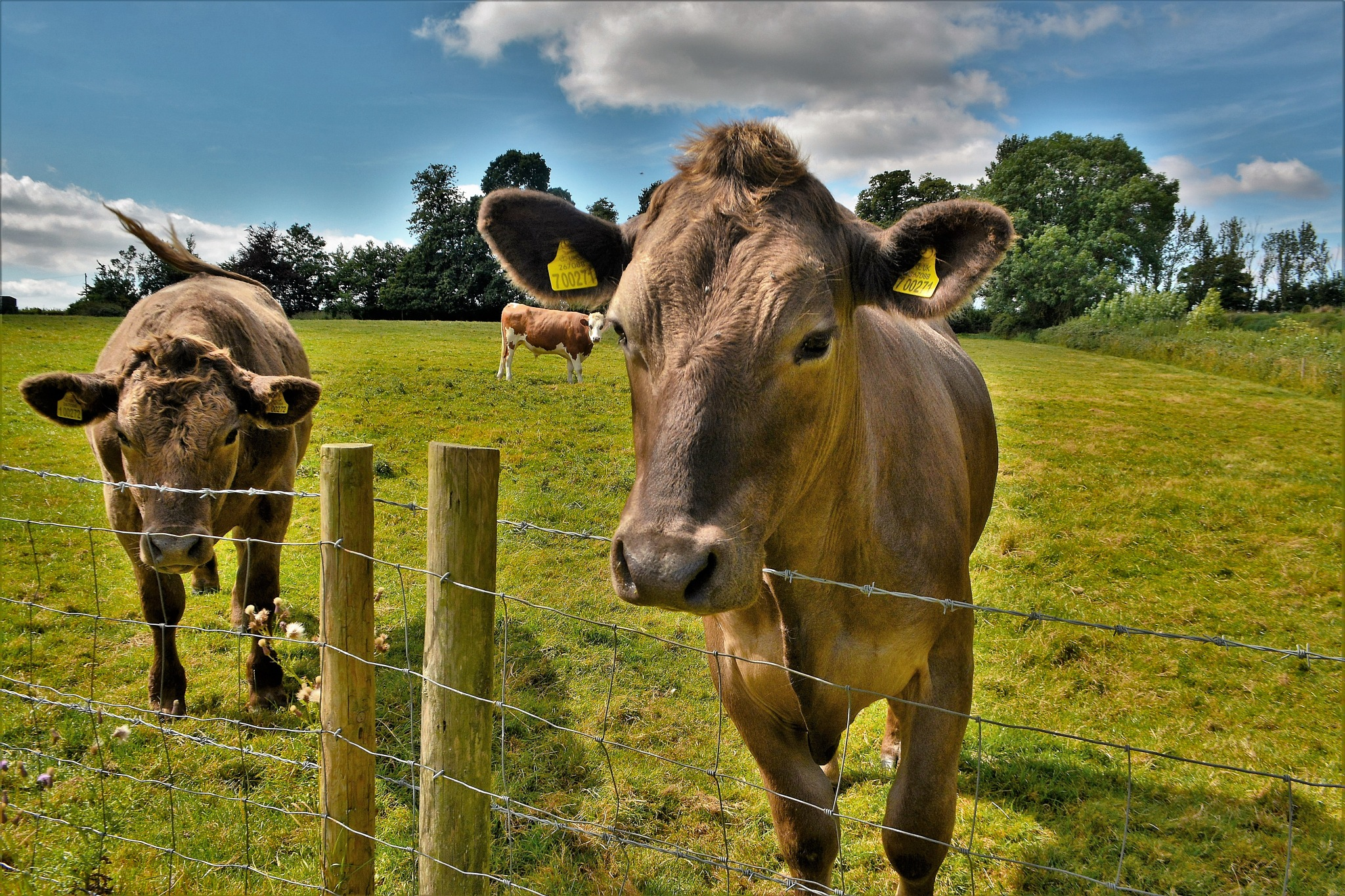 What started off as Bullocks, ended with Bullocks by tim.wells.79