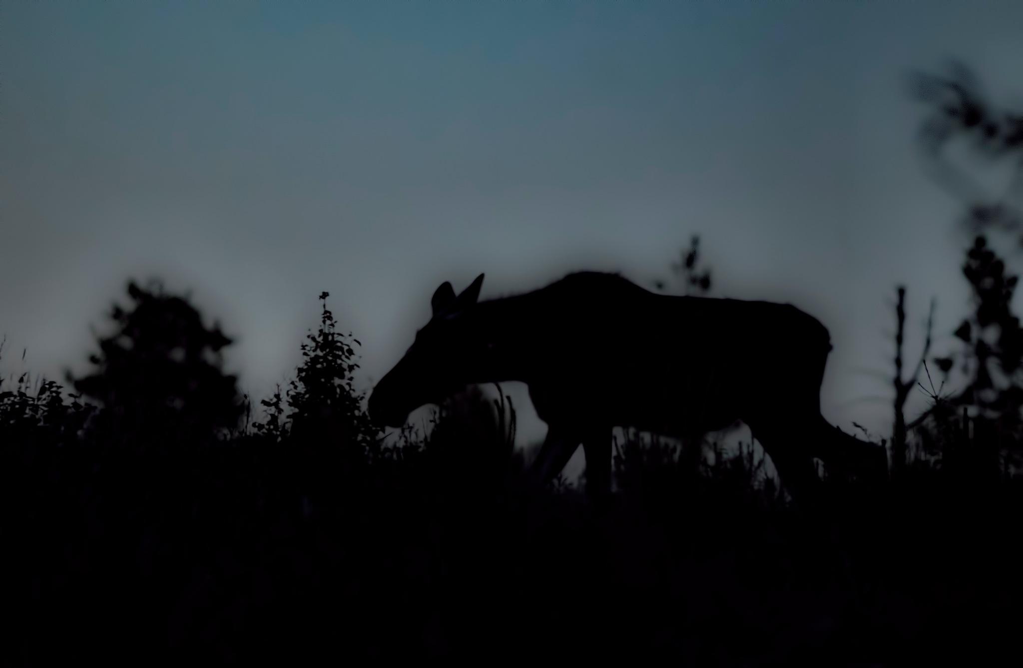 Shadows by Jörgen Lindgren