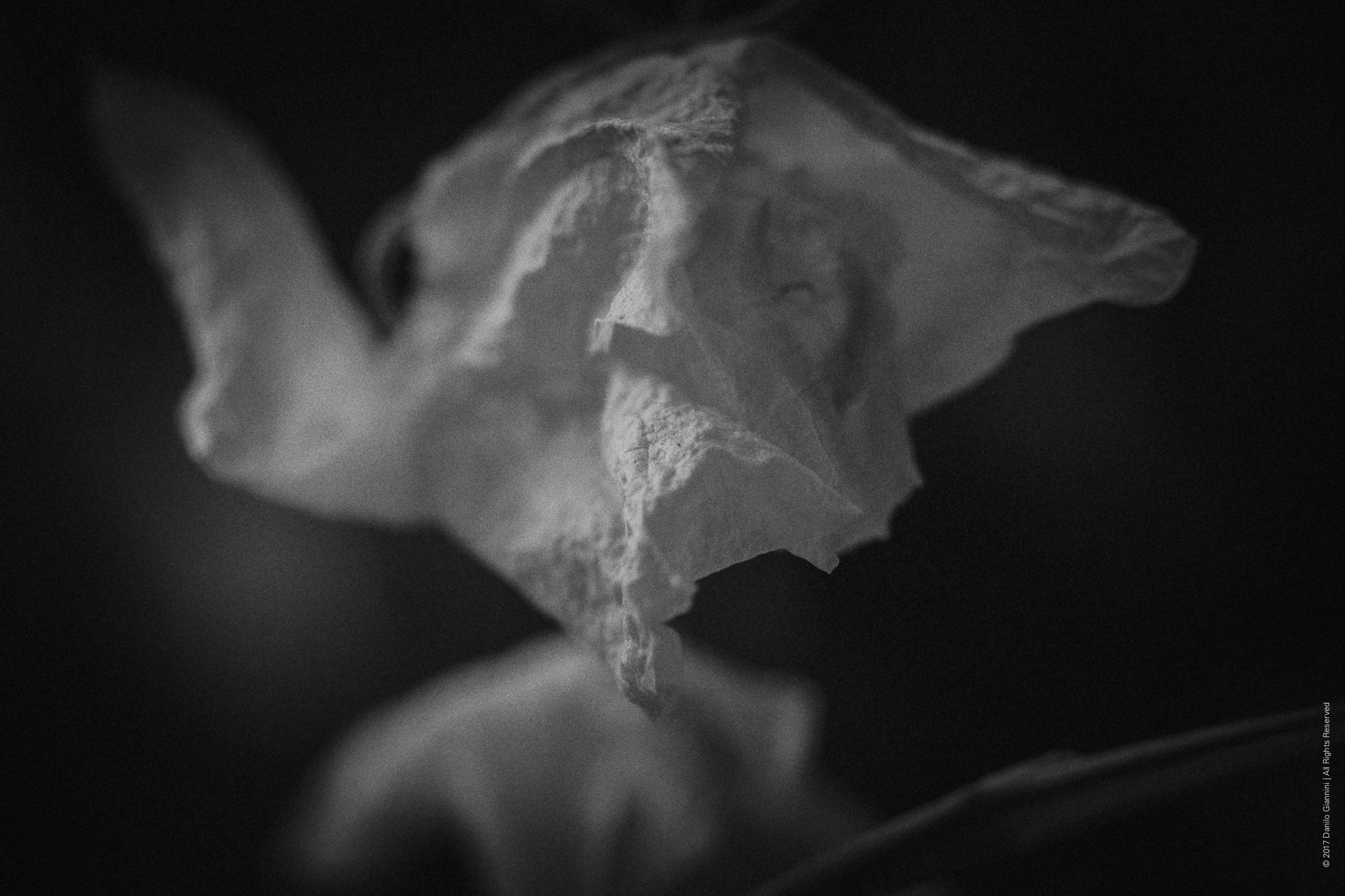 Dried Flowers by Danilo Giannini