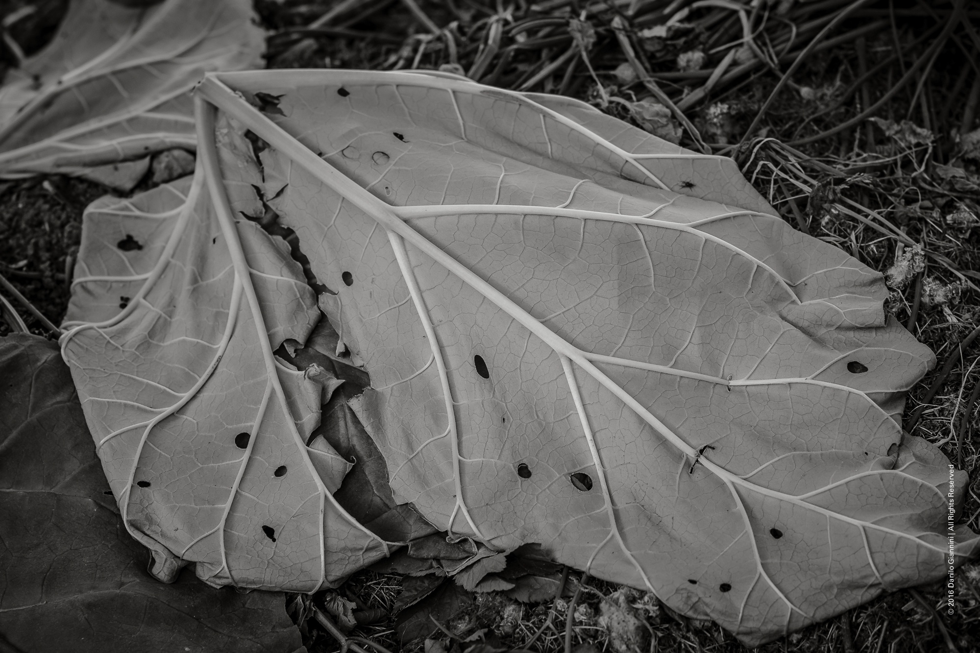 Leaves by Danilo Giannini
